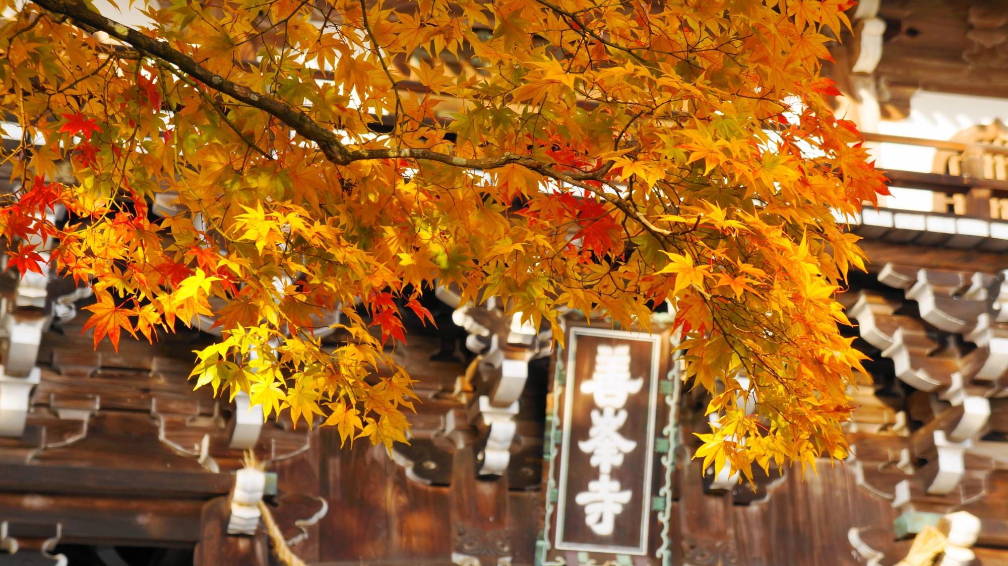 山門と華やかな紅葉