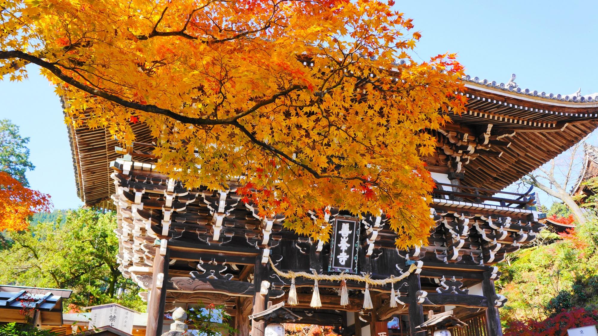 善峯寺の山門と紅葉