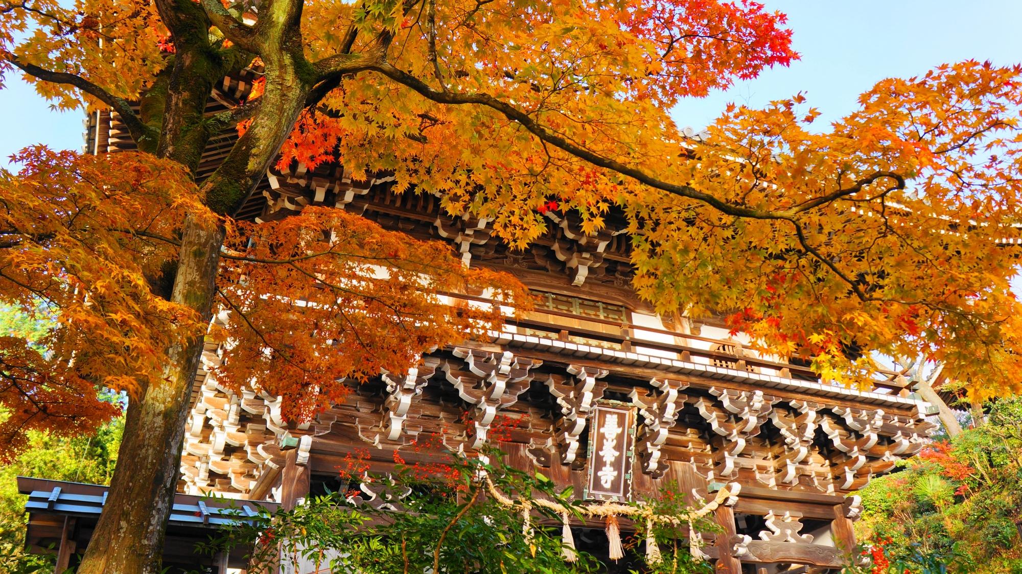 善峯寺の風格ある山門と見事な紅葉