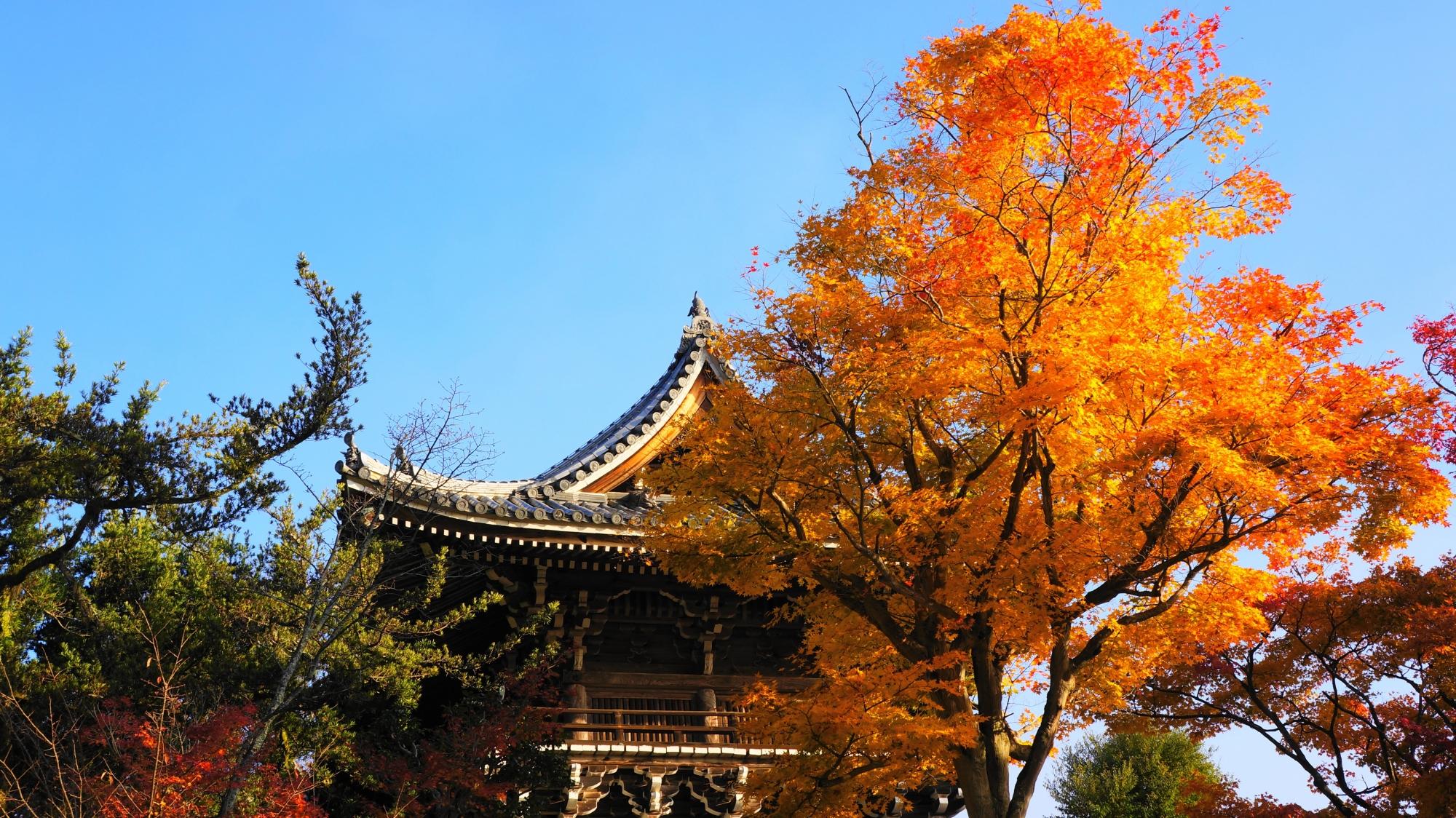 善峯寺の青空に映える紅葉
