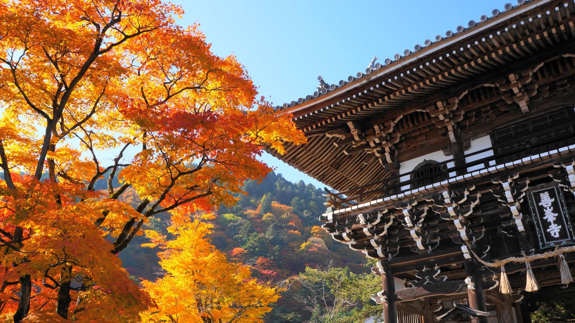 善峯寺山門の黄金に輝く紅葉