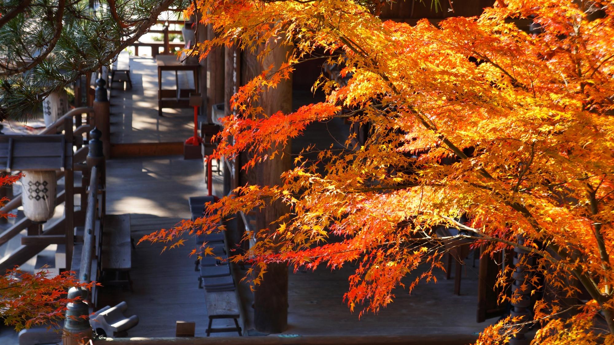 上から眺めた観音堂と紅葉