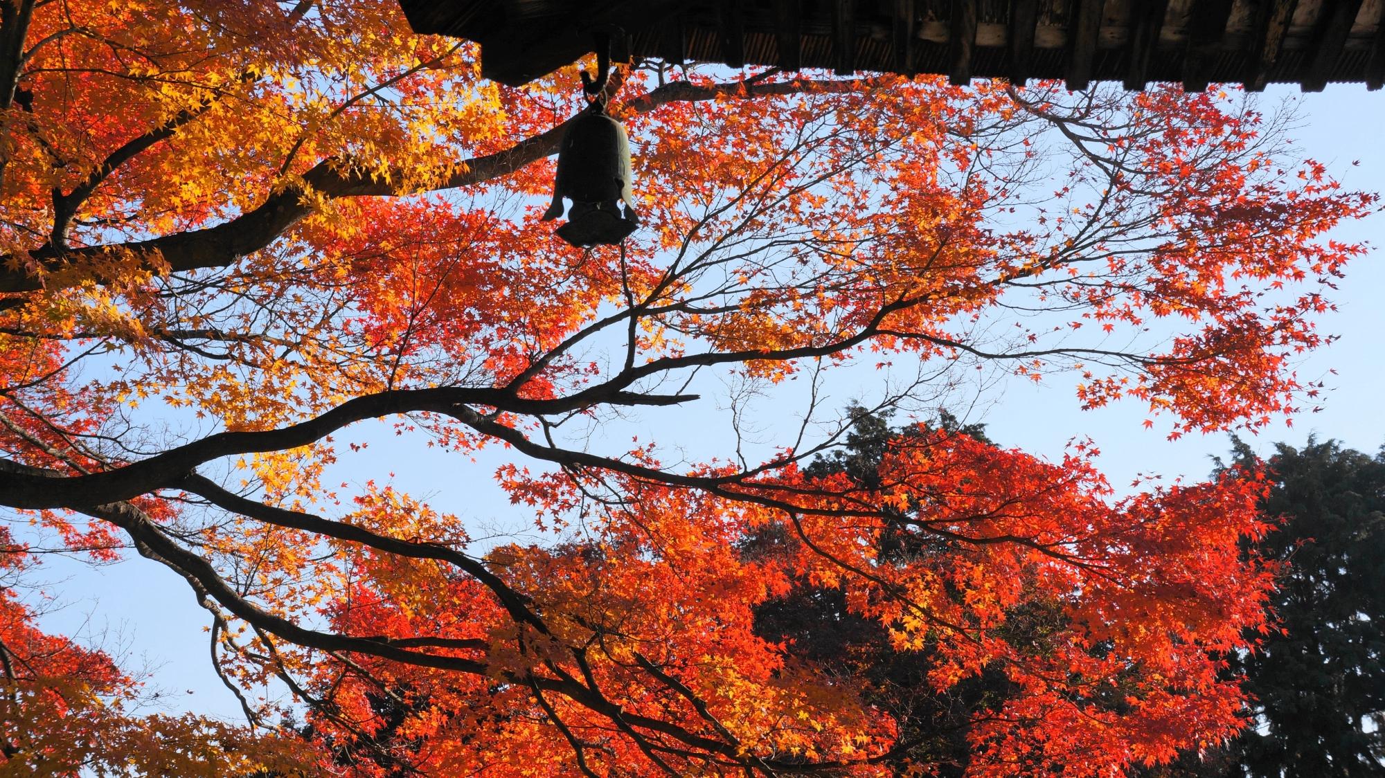 多宝塔の庇の下で輝く紅葉