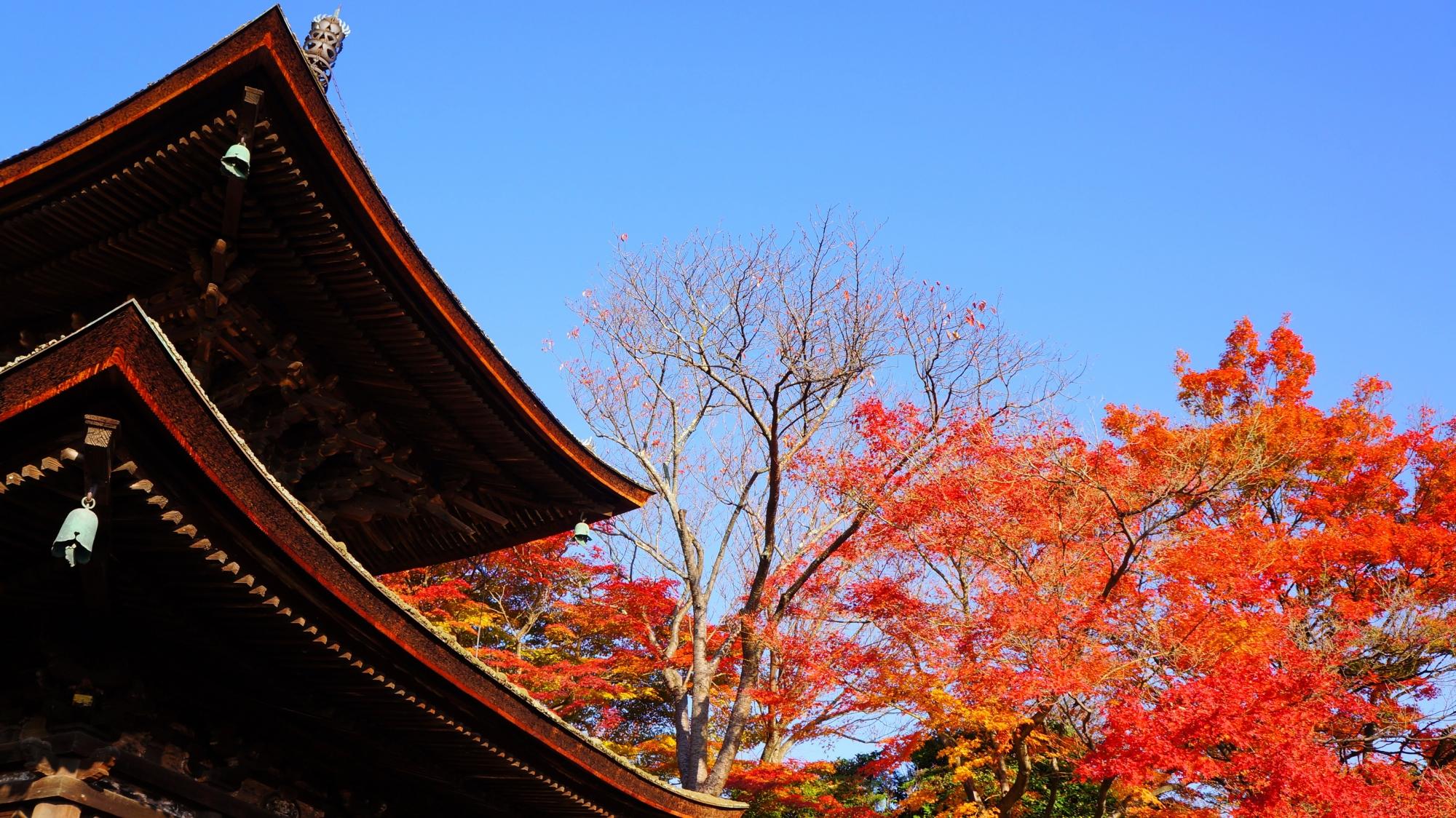 多宝塔と青空に映える鮮やかな紅葉