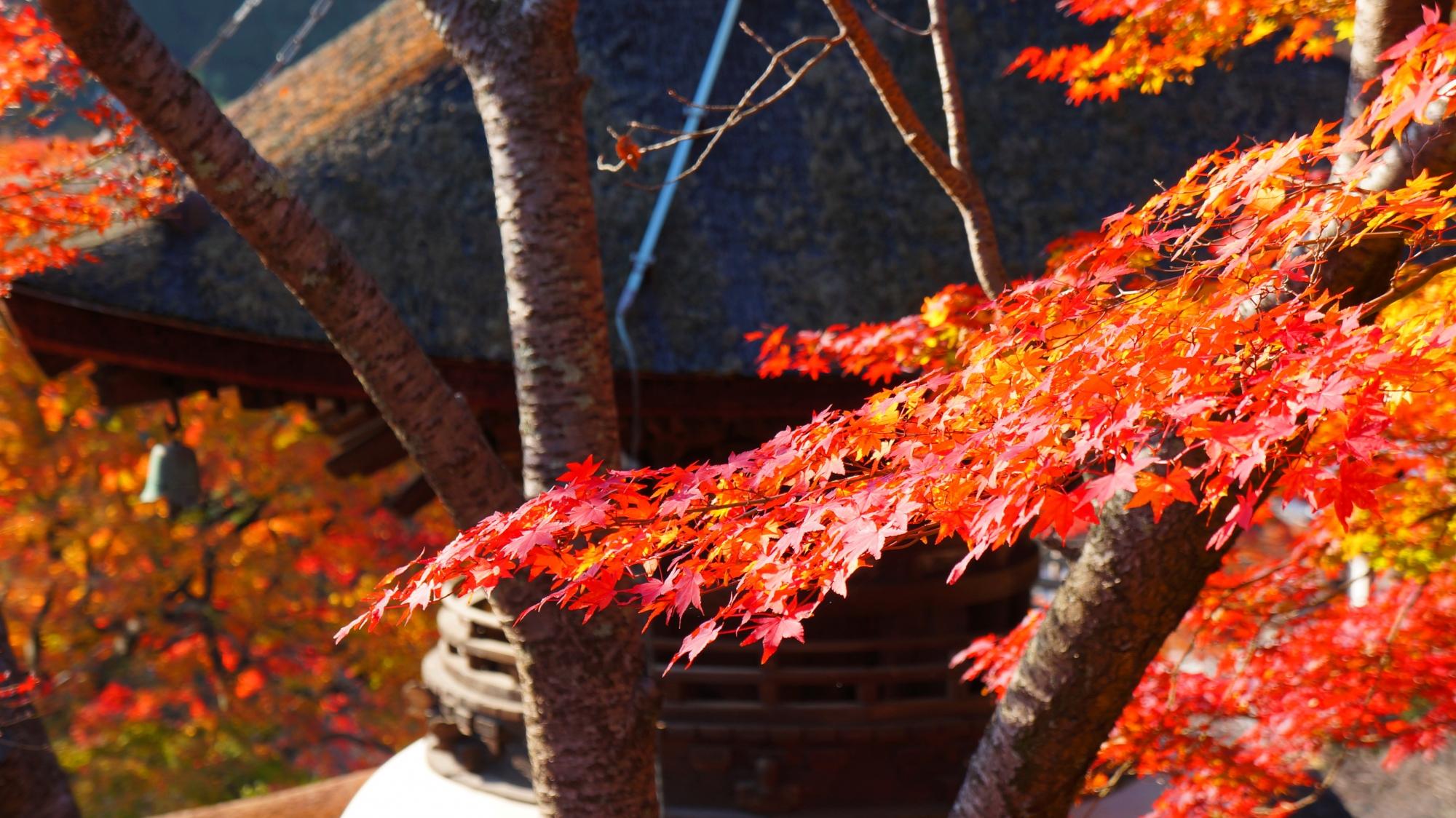 多宝塔に彩りをそえる紅葉