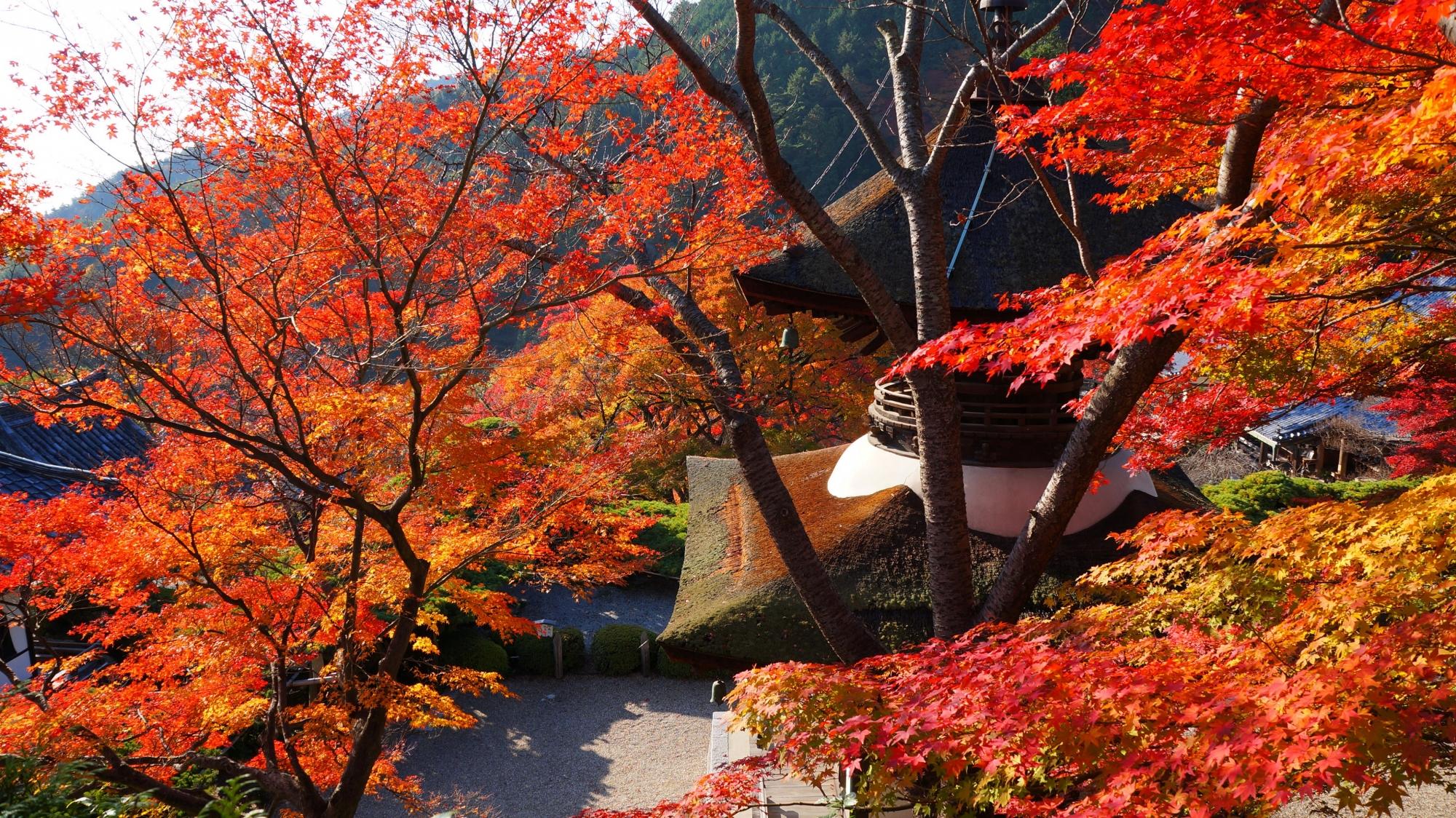 善峯寺の桂昌院廟から眺めた多宝塔と紅葉