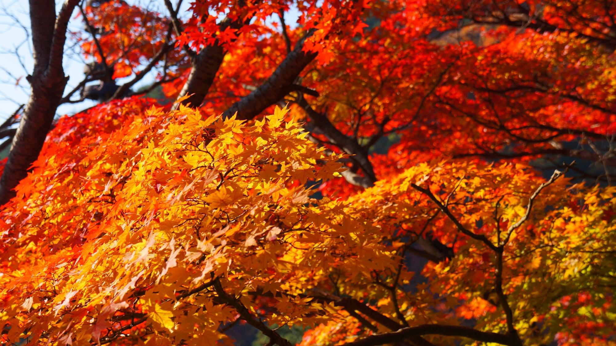 善峯寺の見ごろの美しすぎる紅葉