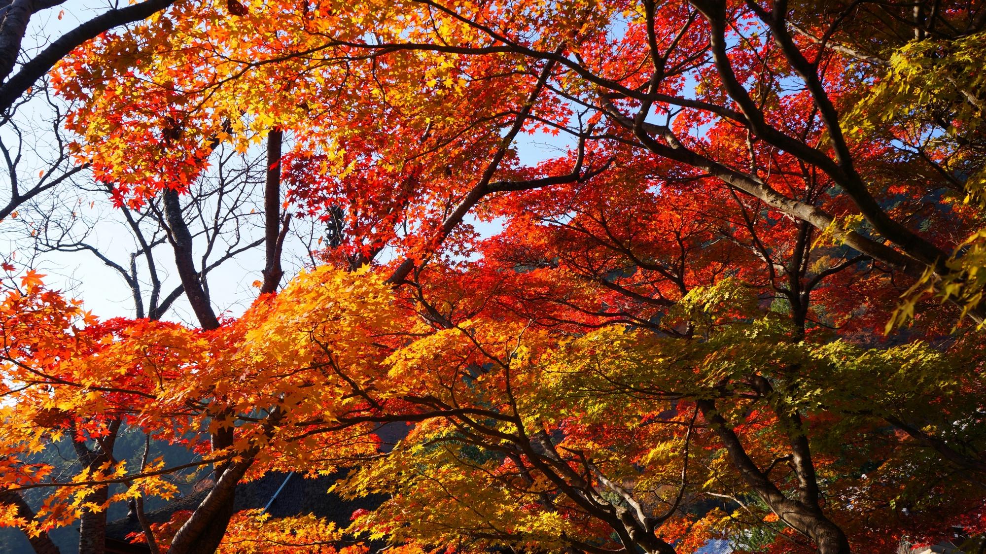 善峯寺の桂昌院廟の紅葉