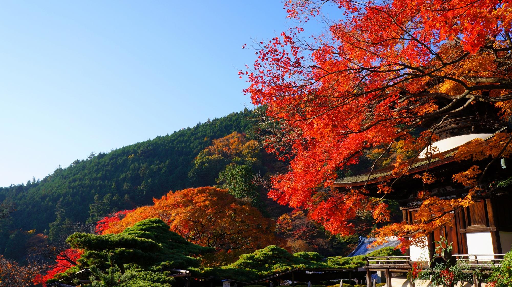 善峯寺の青空に映える赤い紅葉と多宝塔