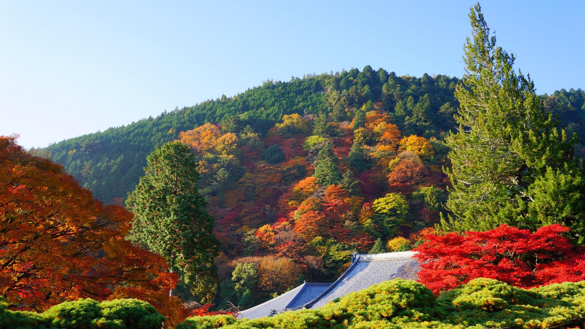 善峯寺の色んな秋色