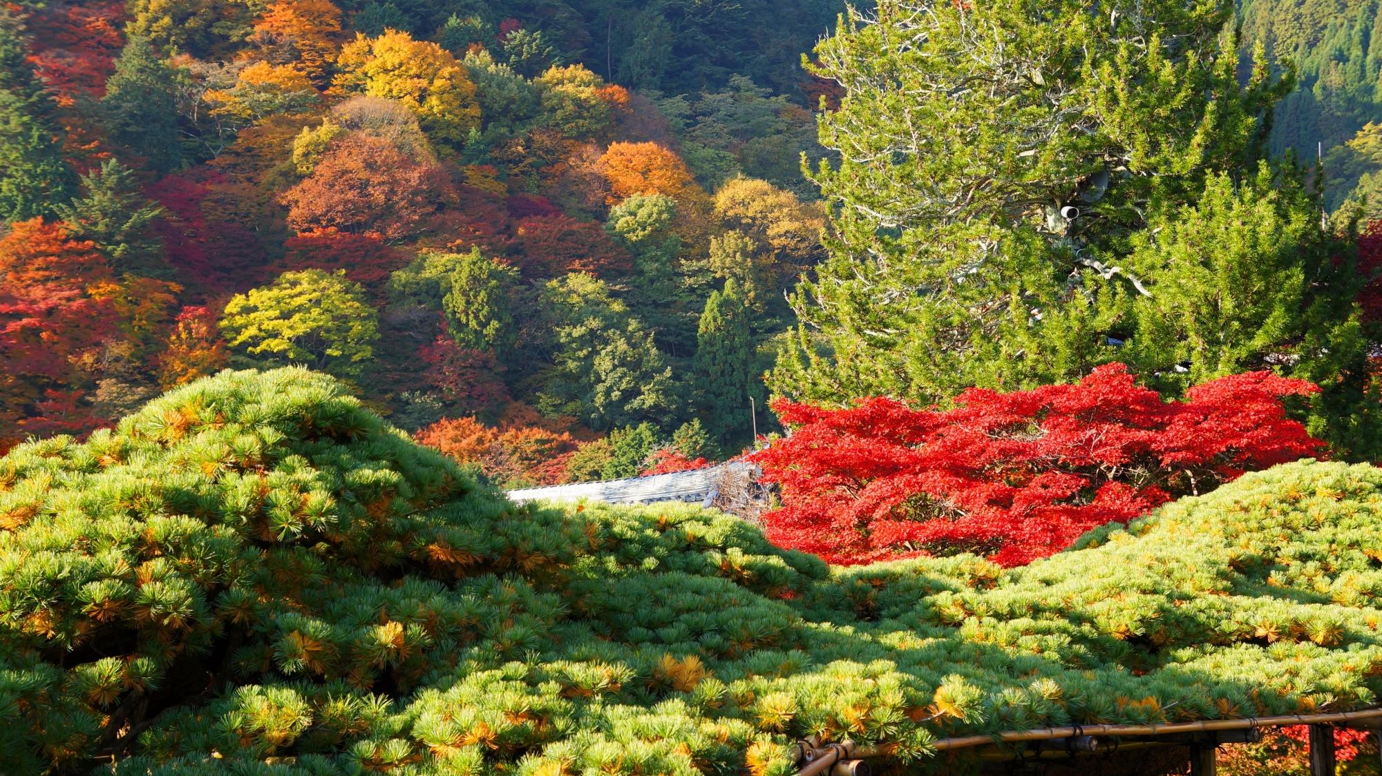 善峯寺の色とりどりに色づく山