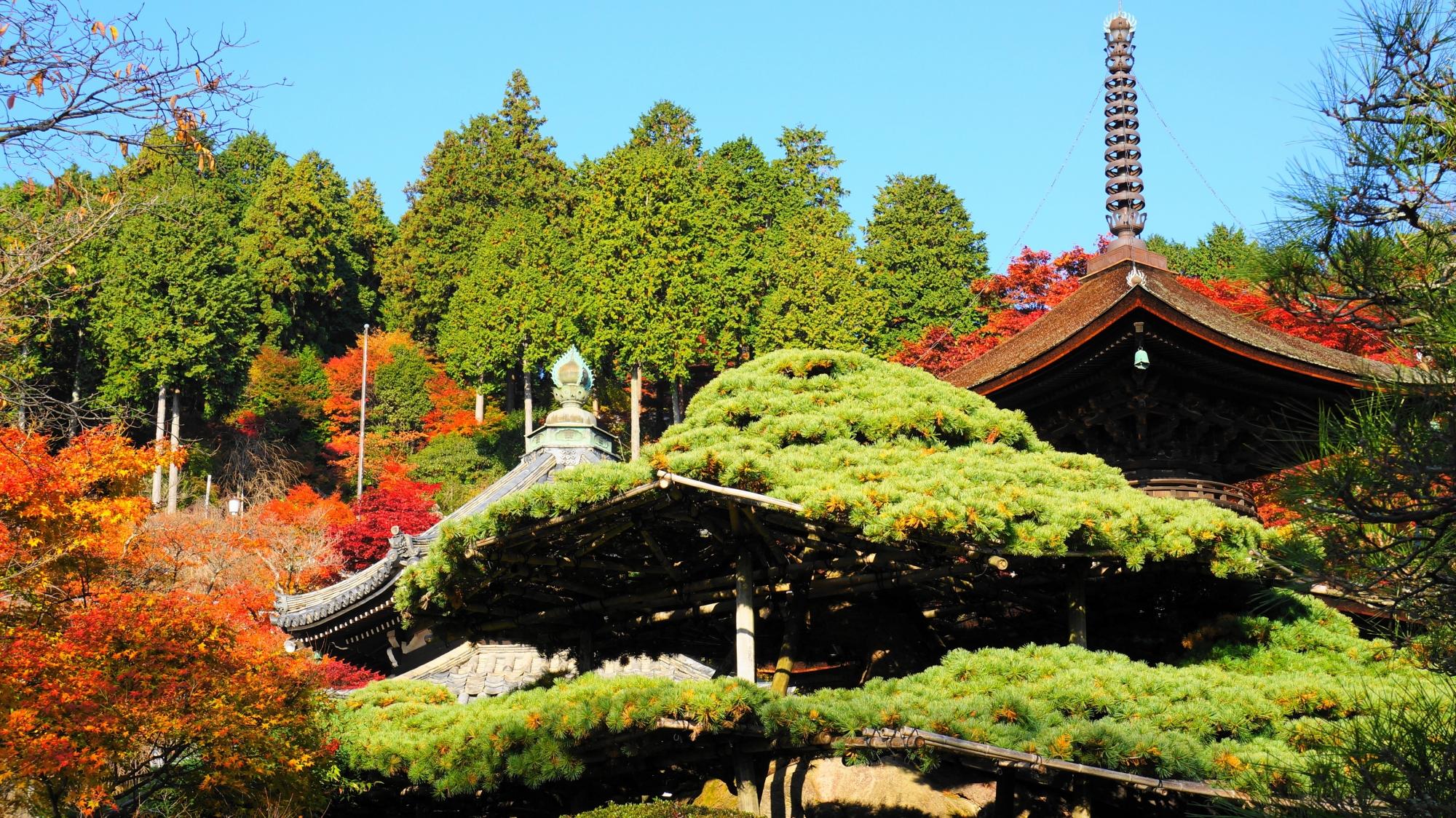 多宝塔を背景にした遊龍の松と紅葉