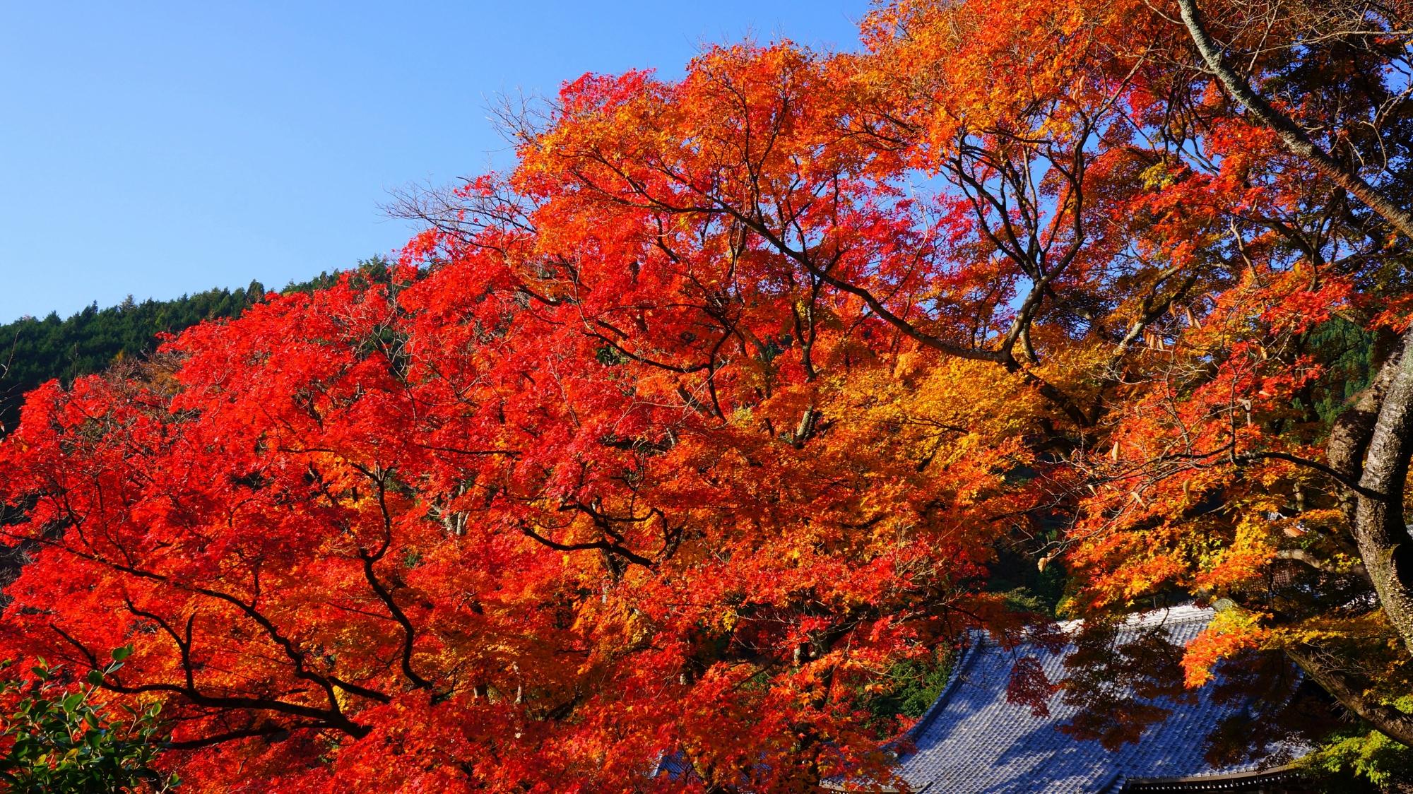 善峯寺の護摩堂と紅葉