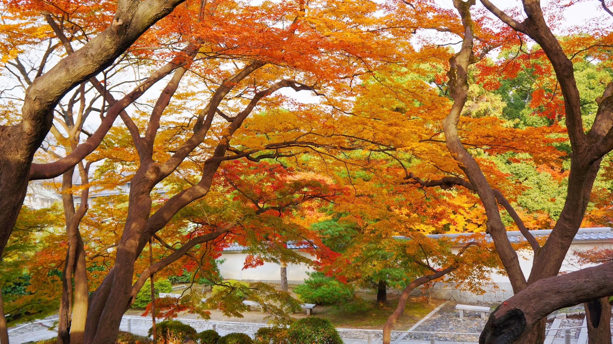 黒門坂 紅葉 知恩院の淡く優雅な秋の彩り