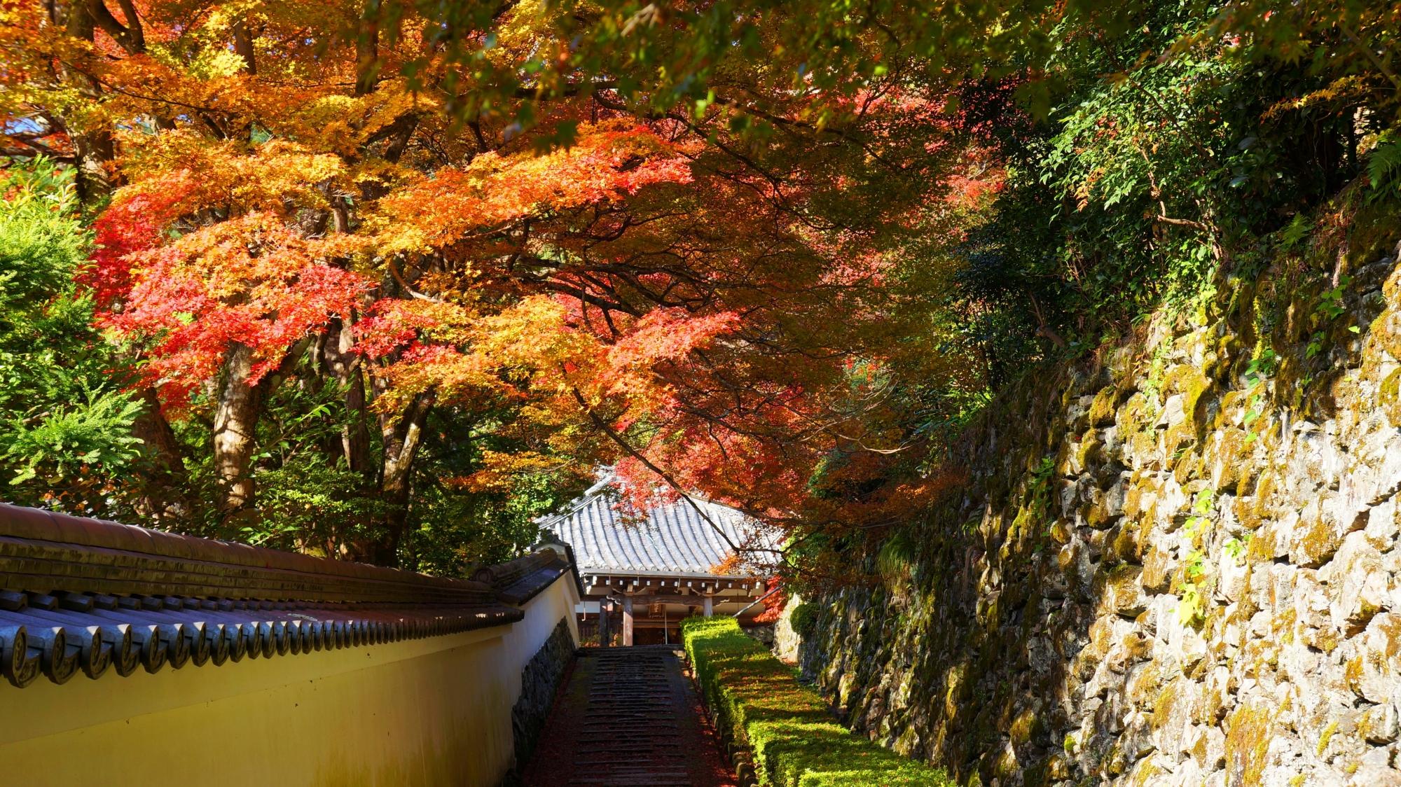 阿弥陀堂前の石段の紅葉
