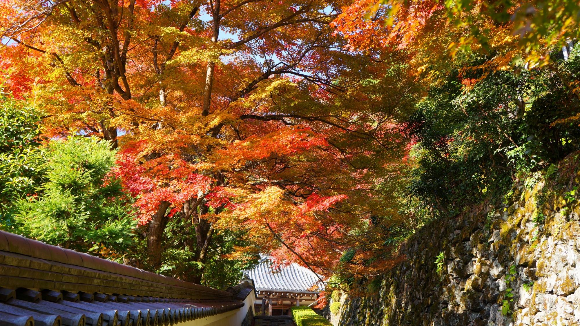 阿弥陀堂前の鮮やかな紅葉
