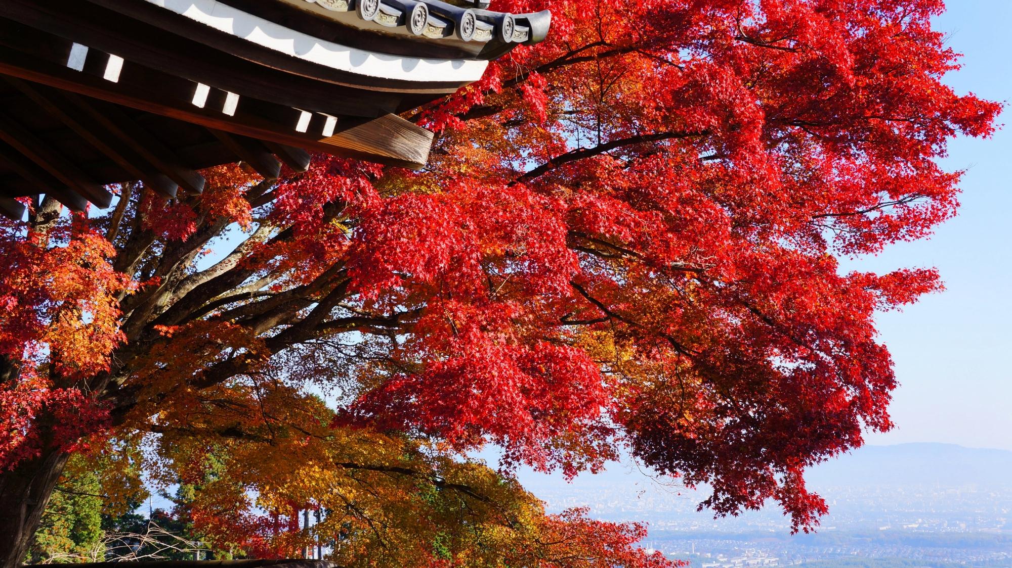 善峯寺の京都市内の景色と鮮やかな赤い紅葉