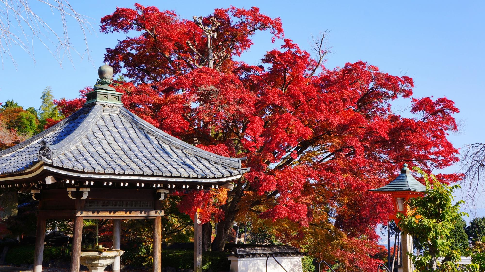 善峯寺の釈迦堂前の紅葉