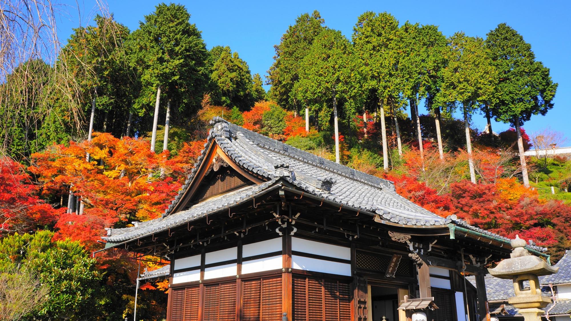 善峯寺の釈迦堂と紅葉