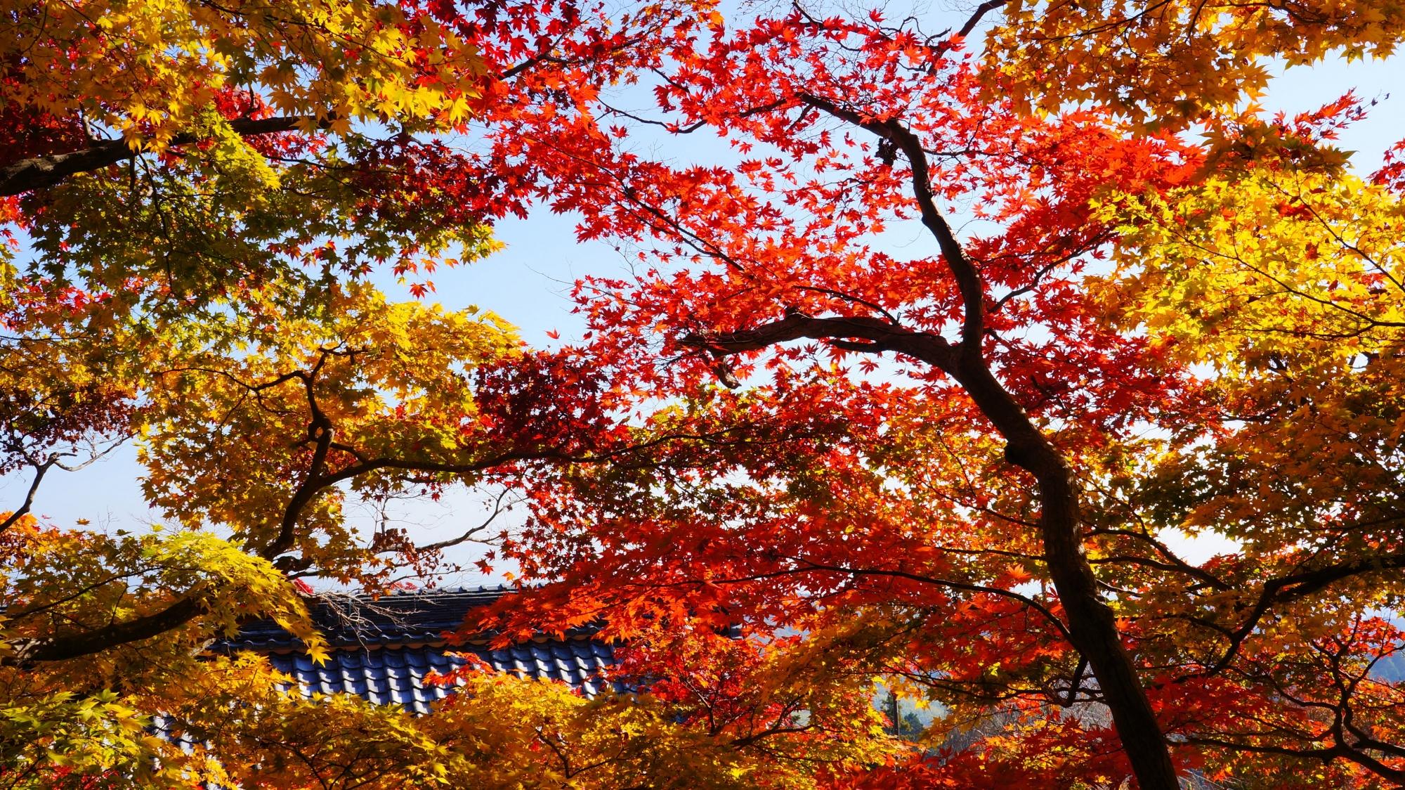 善峯寺の色とりどりの紅葉