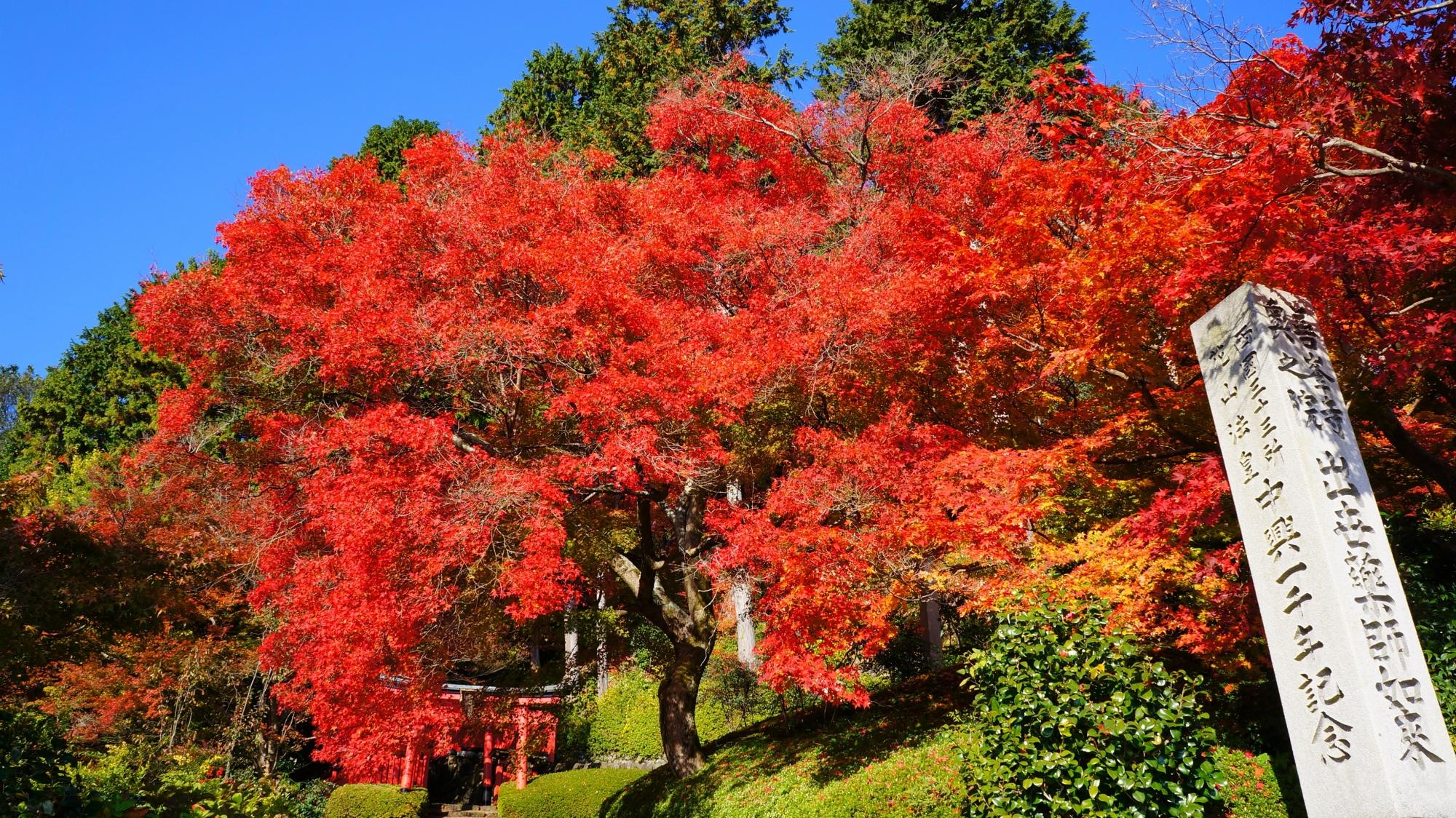 善峯寺の稲荷社の真っ赤な紅葉