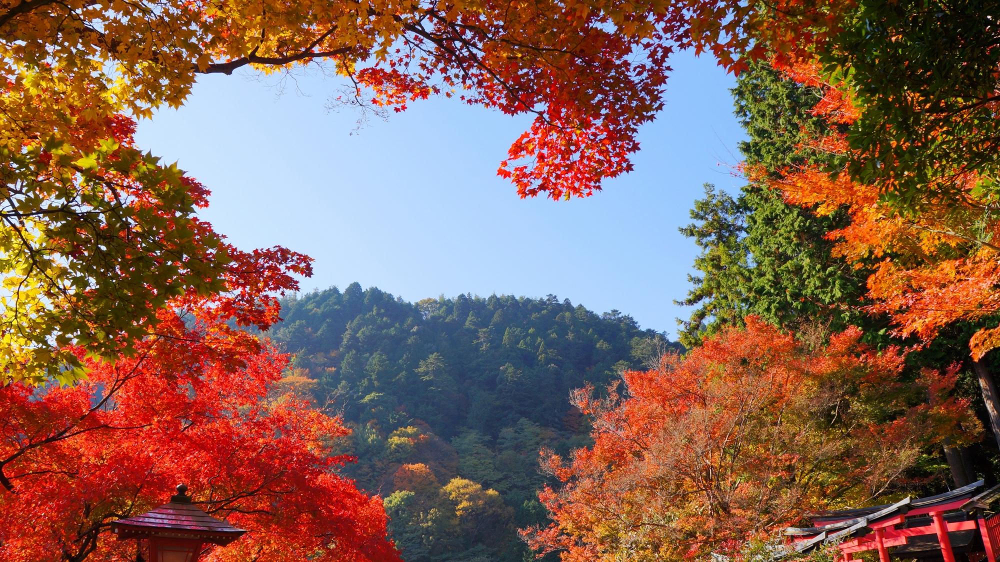 善峯寺の秋晴れと紅葉