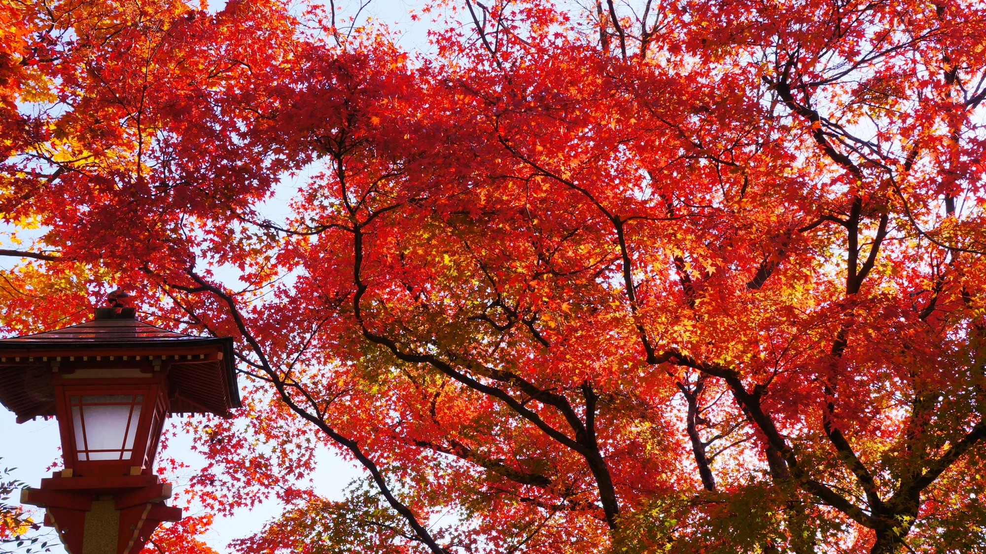 善峯寺の燈籠と紅葉
