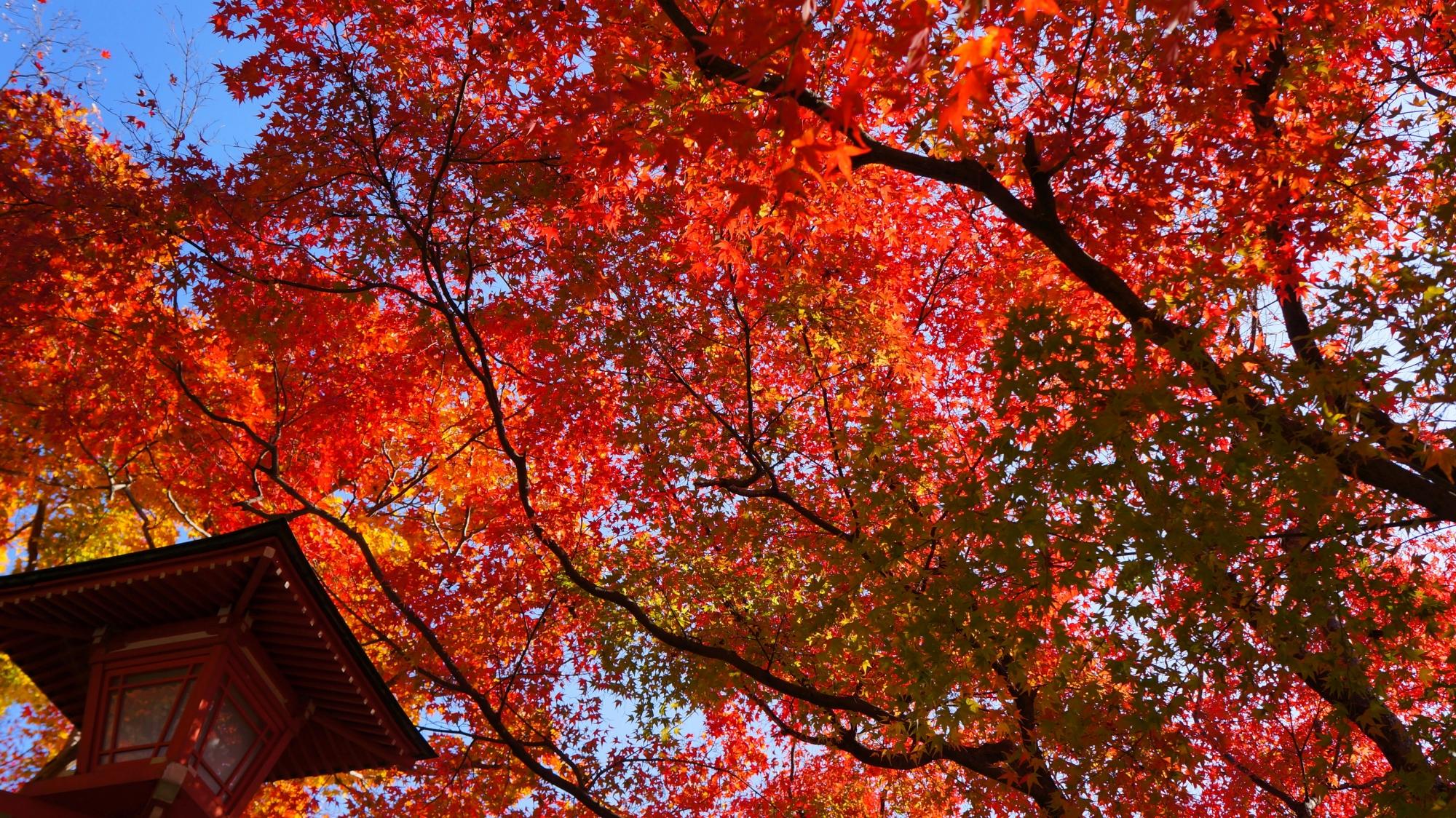 善峯寺の素晴らしい紅葉と情景