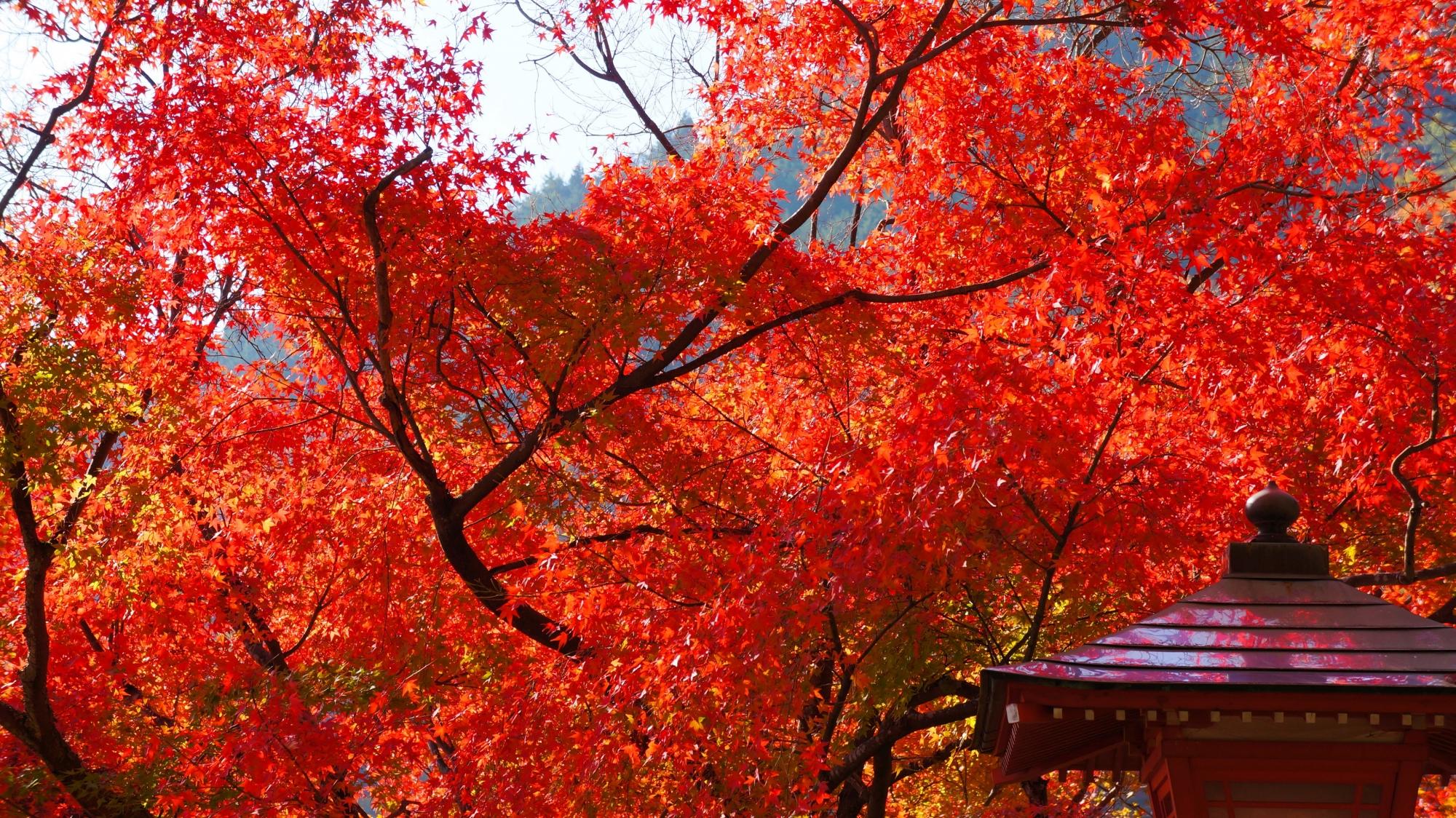 青空と紅葉が映る燈籠と秋の景色