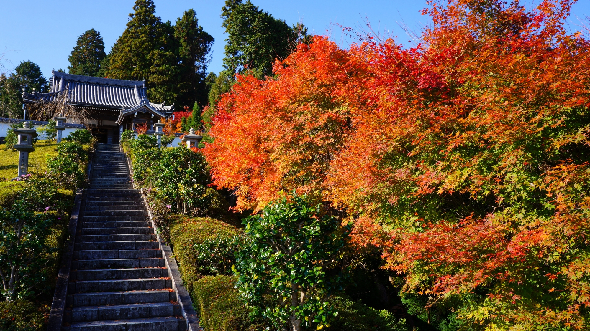 善峯寺の薬師堂と紅葉