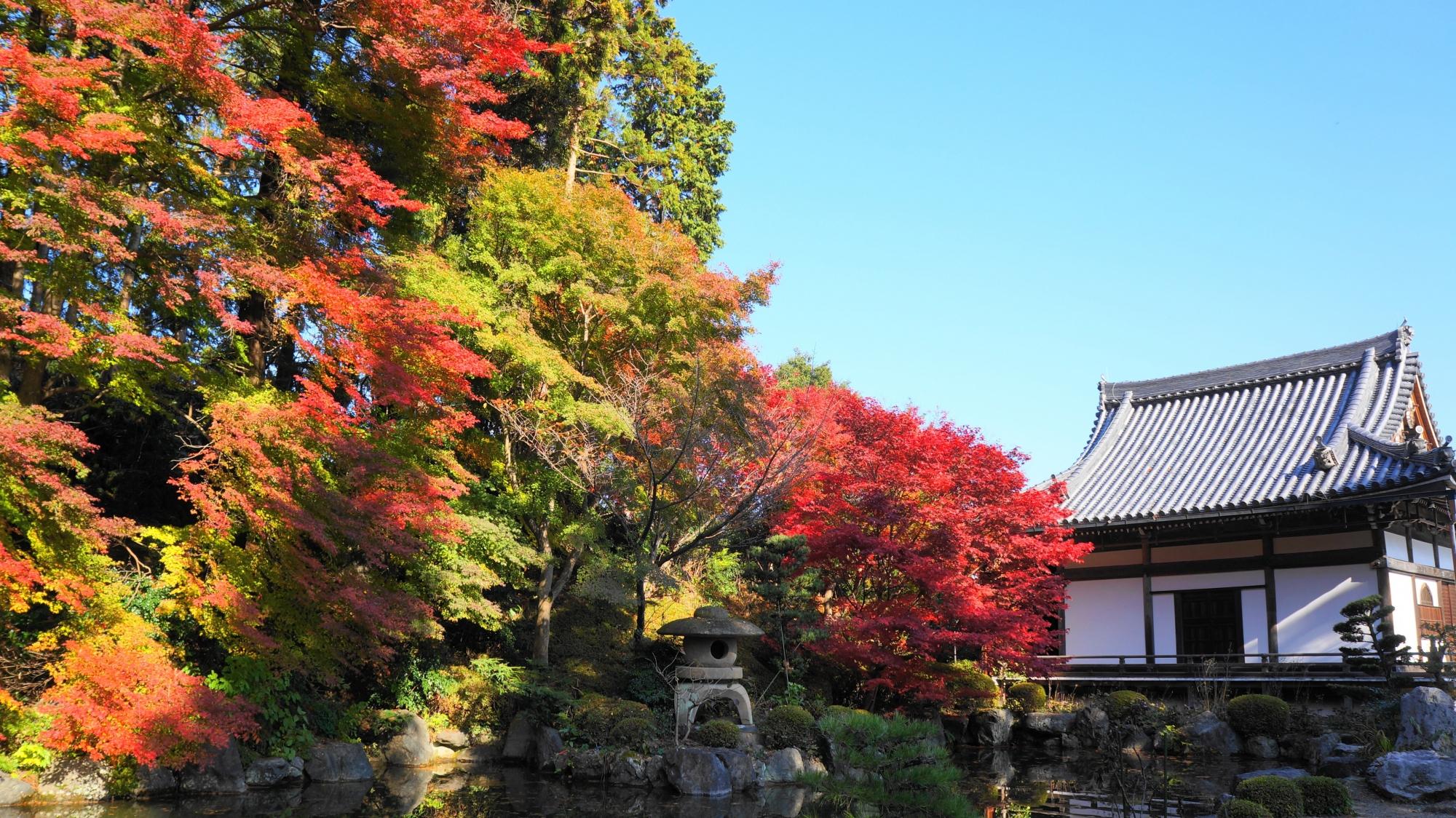 善峯寺の薬師堂と蓮華寿院庭の紅葉