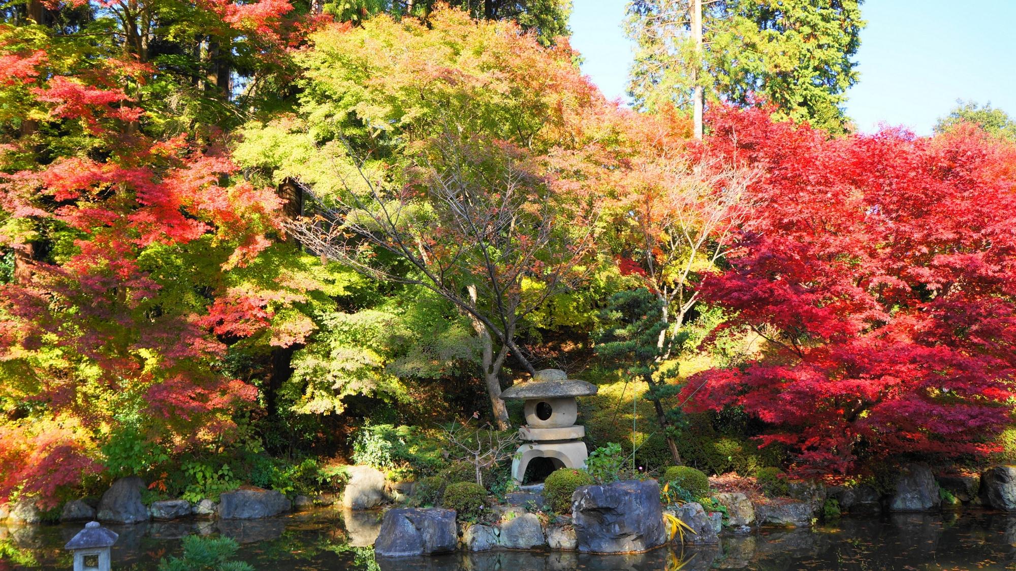 善峯寺の色づき中の紅葉