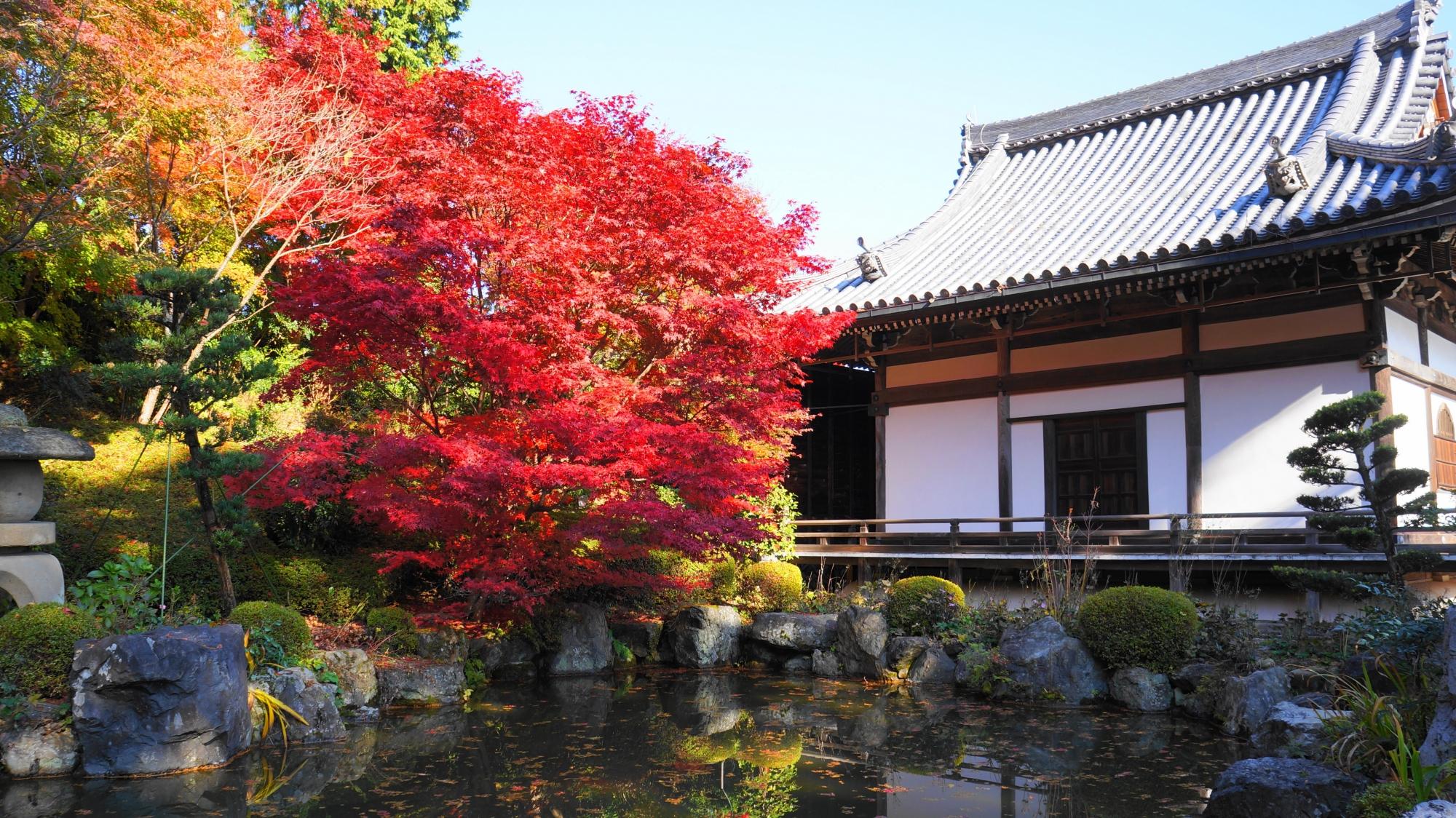 善峯寺の蓮華寿院庭の紅葉