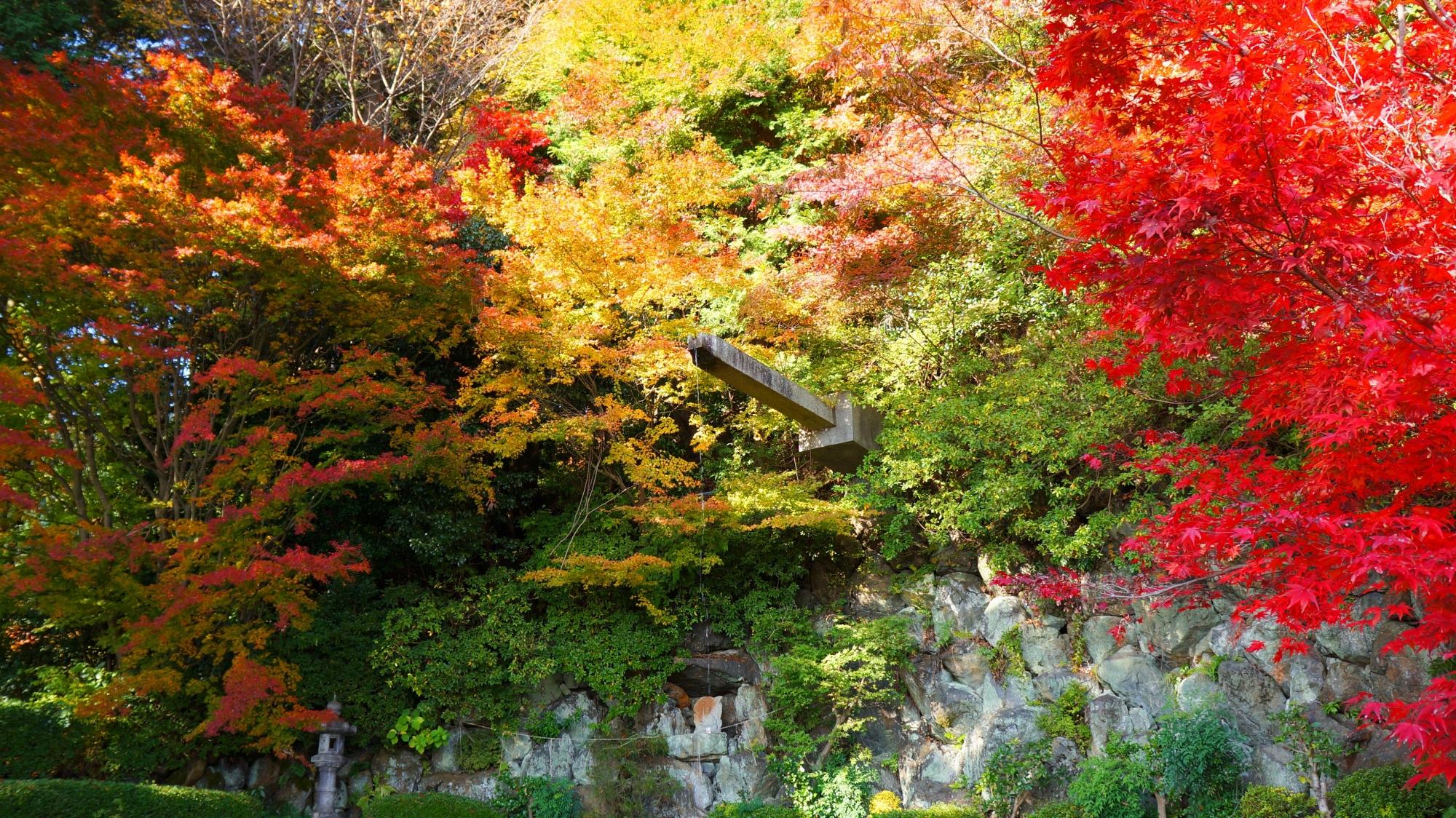 善峯寺の青蓮の滝と紅葉