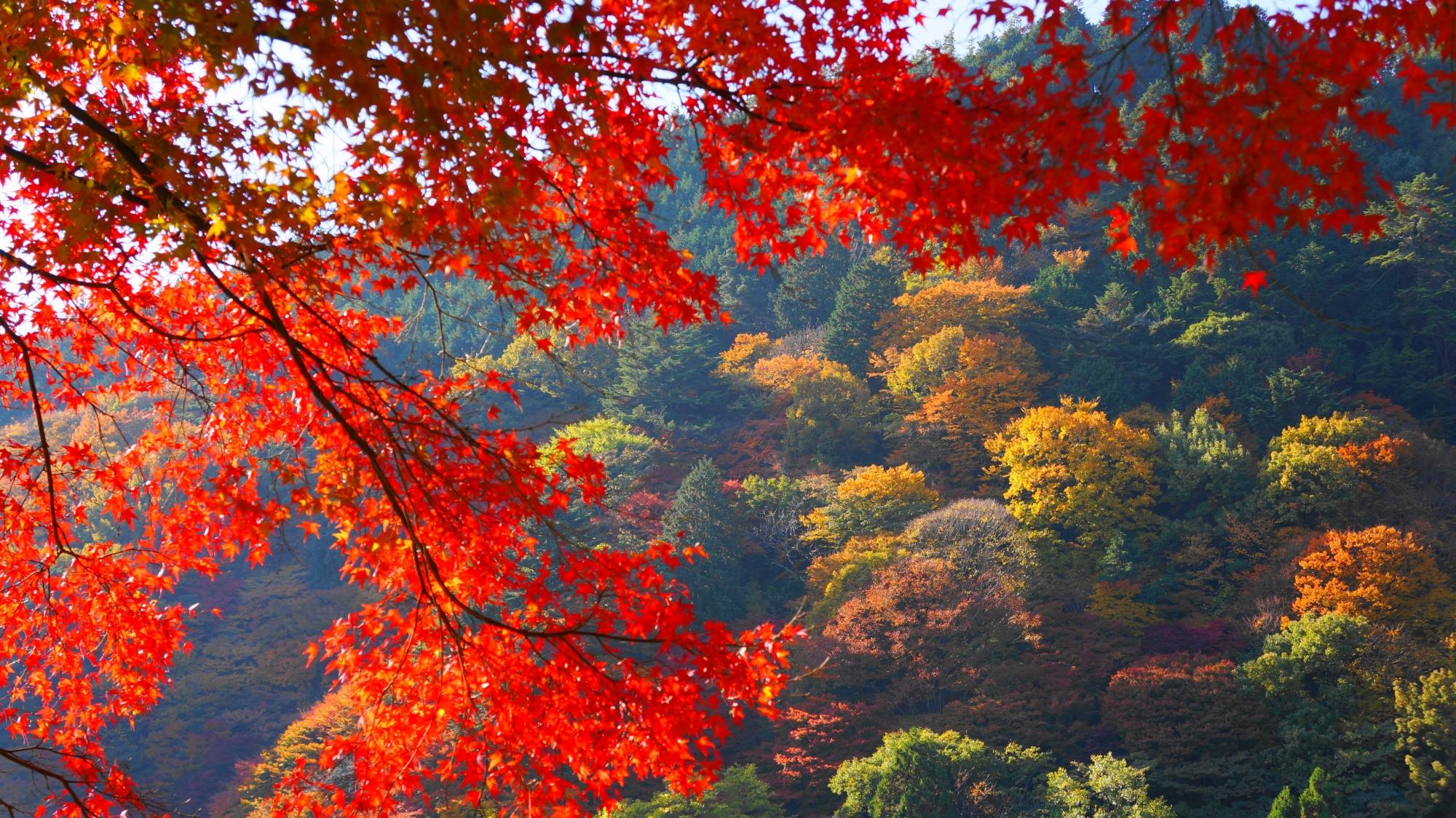 善峯寺の真っ赤な紅葉と色づく山