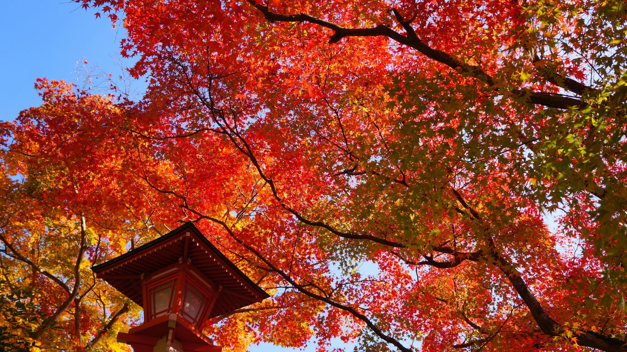 華やかな秋色の空間