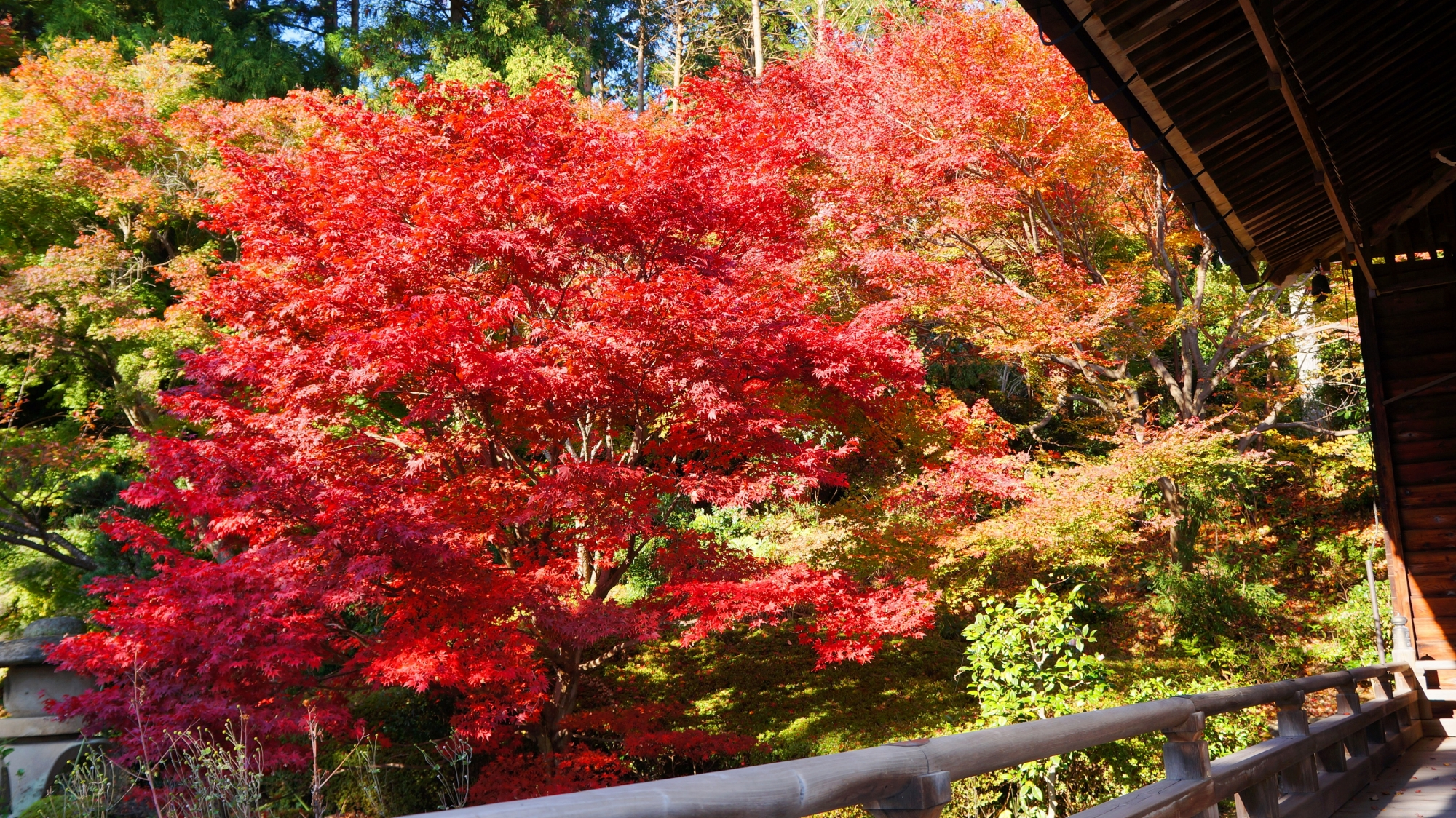 蓮華寿院庭の鮮やかな赤い紅葉
