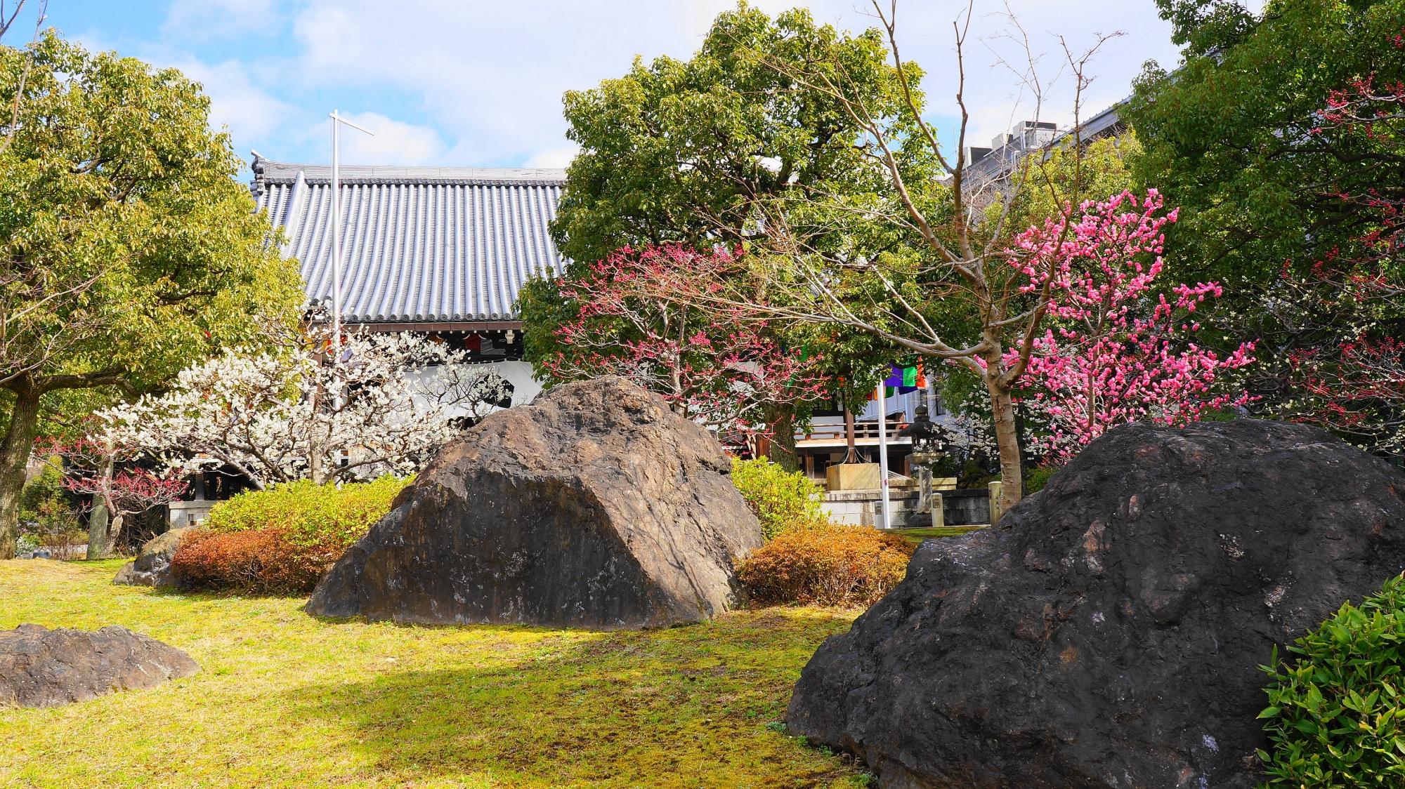 大きな岩と梅の風情ある春先の景色