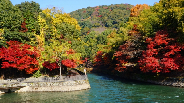 Uji-River Kyoto autumn leaves 見ごろ 秋 観流橋