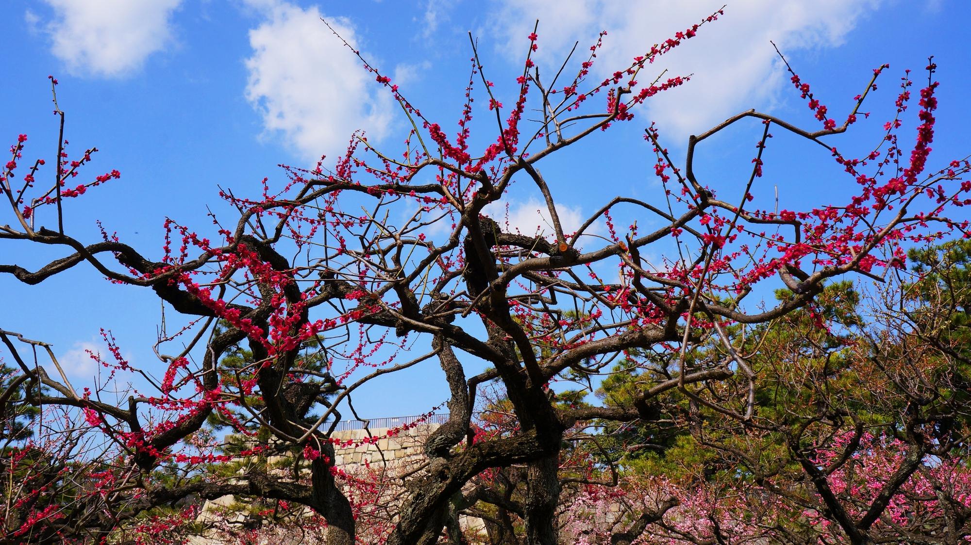 空を鮮やかに彩る芸術的な枝と花