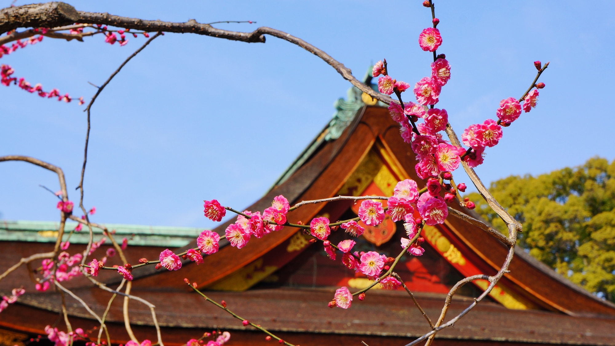 自由奔放に伸びていく感じがする梅の枝