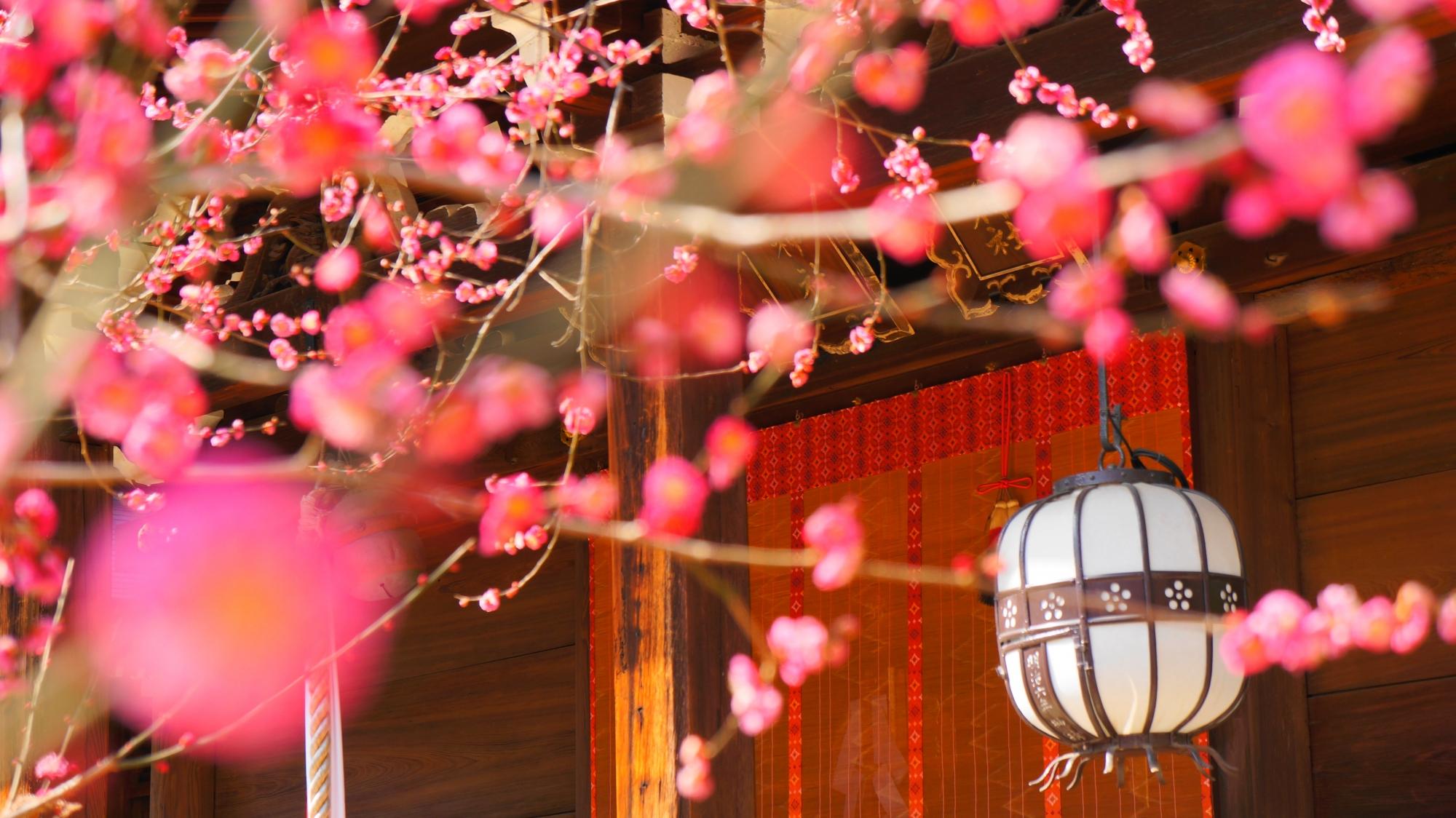 梅の花に良く合う白い吊るし灯篭