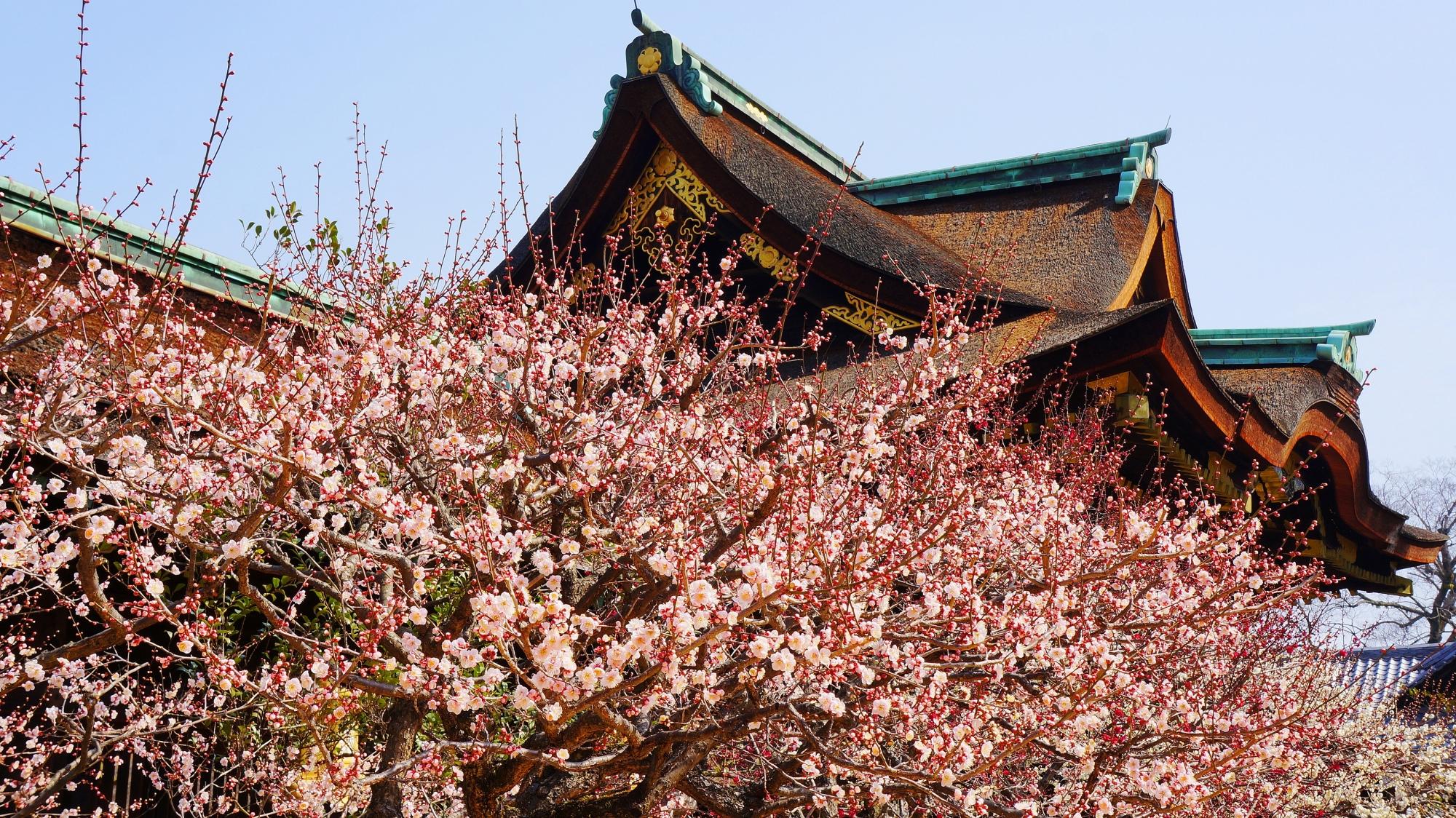 三光門を優しくつつむ淡いピンクの梅の花
