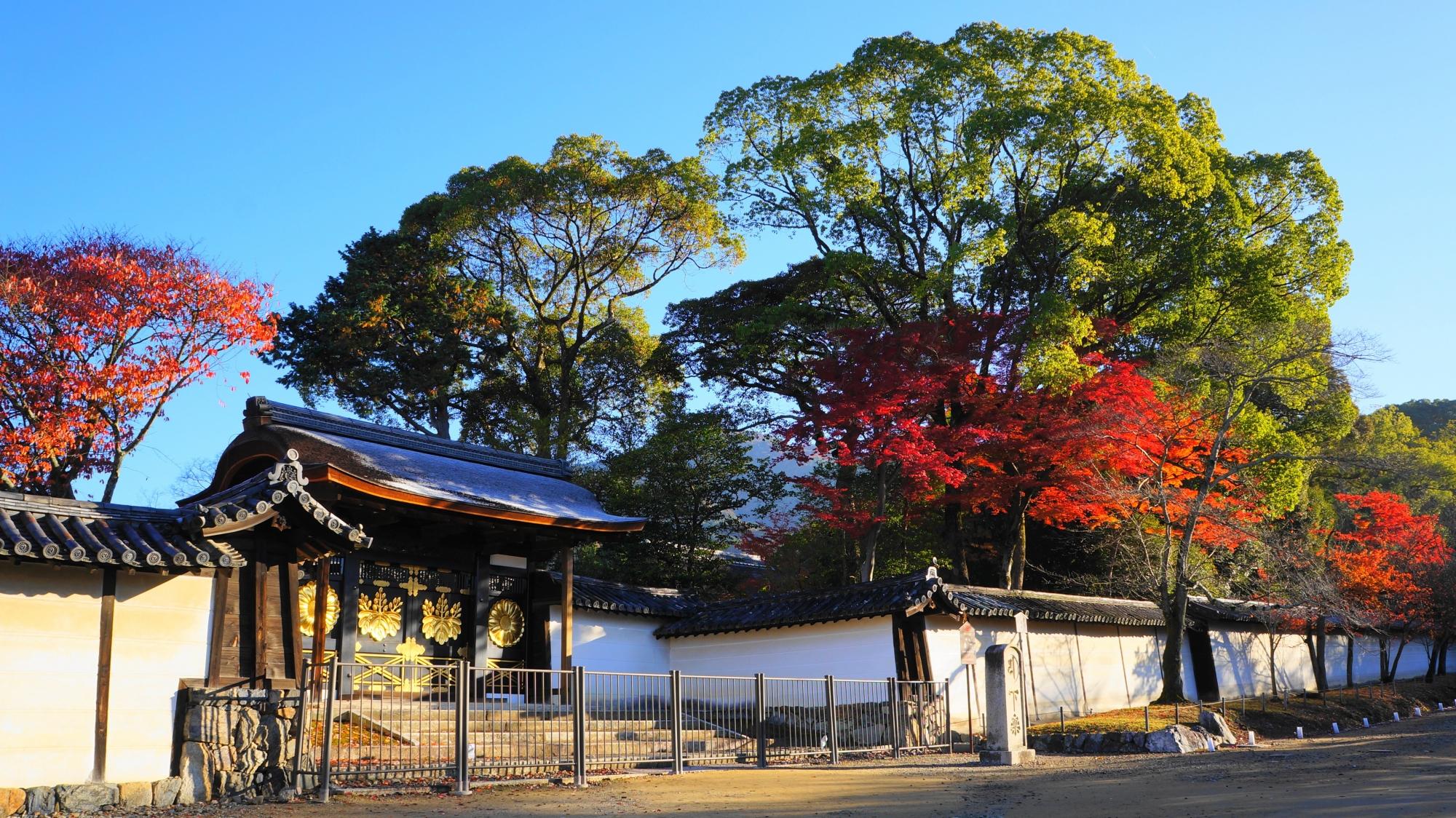 醍醐寺の唐門と煌く紅葉