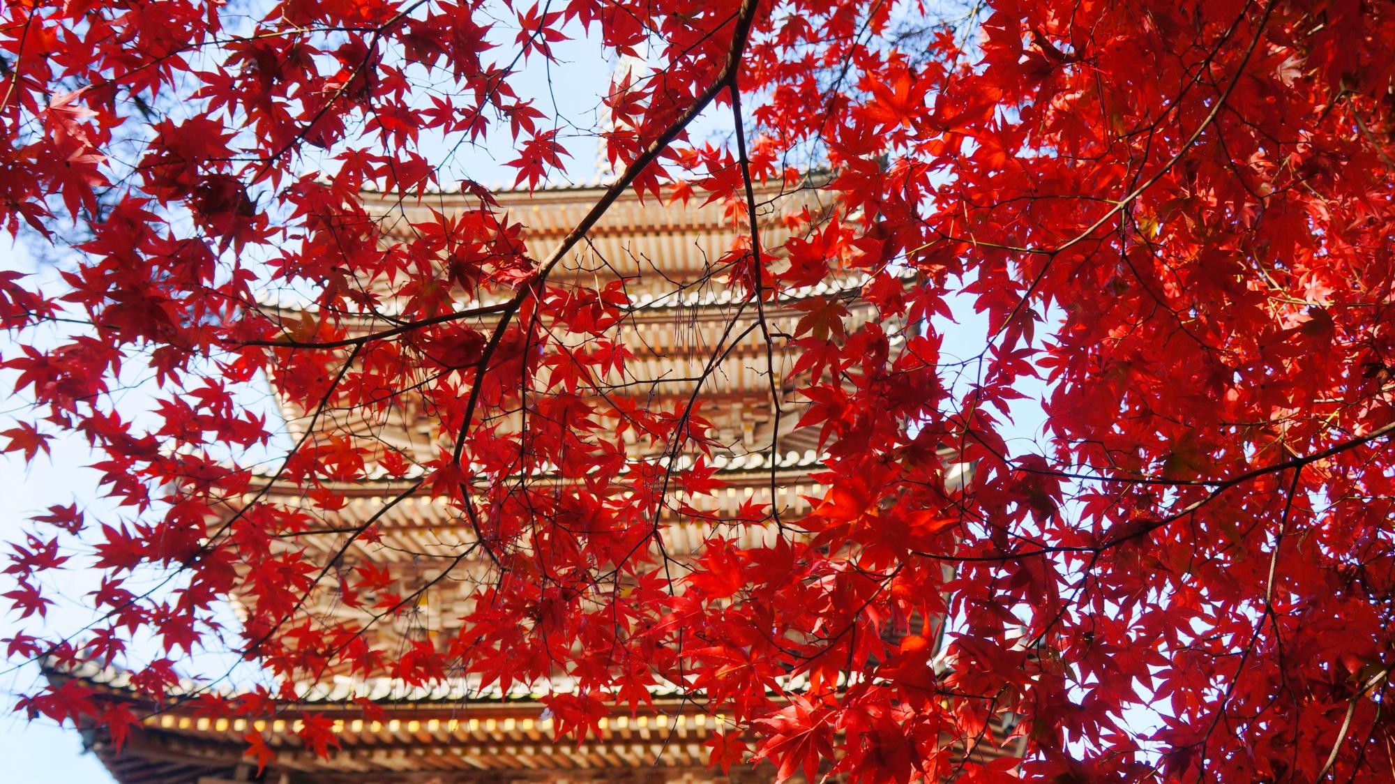 散りばめられた赤い星のように五重塔を彩る紅葉