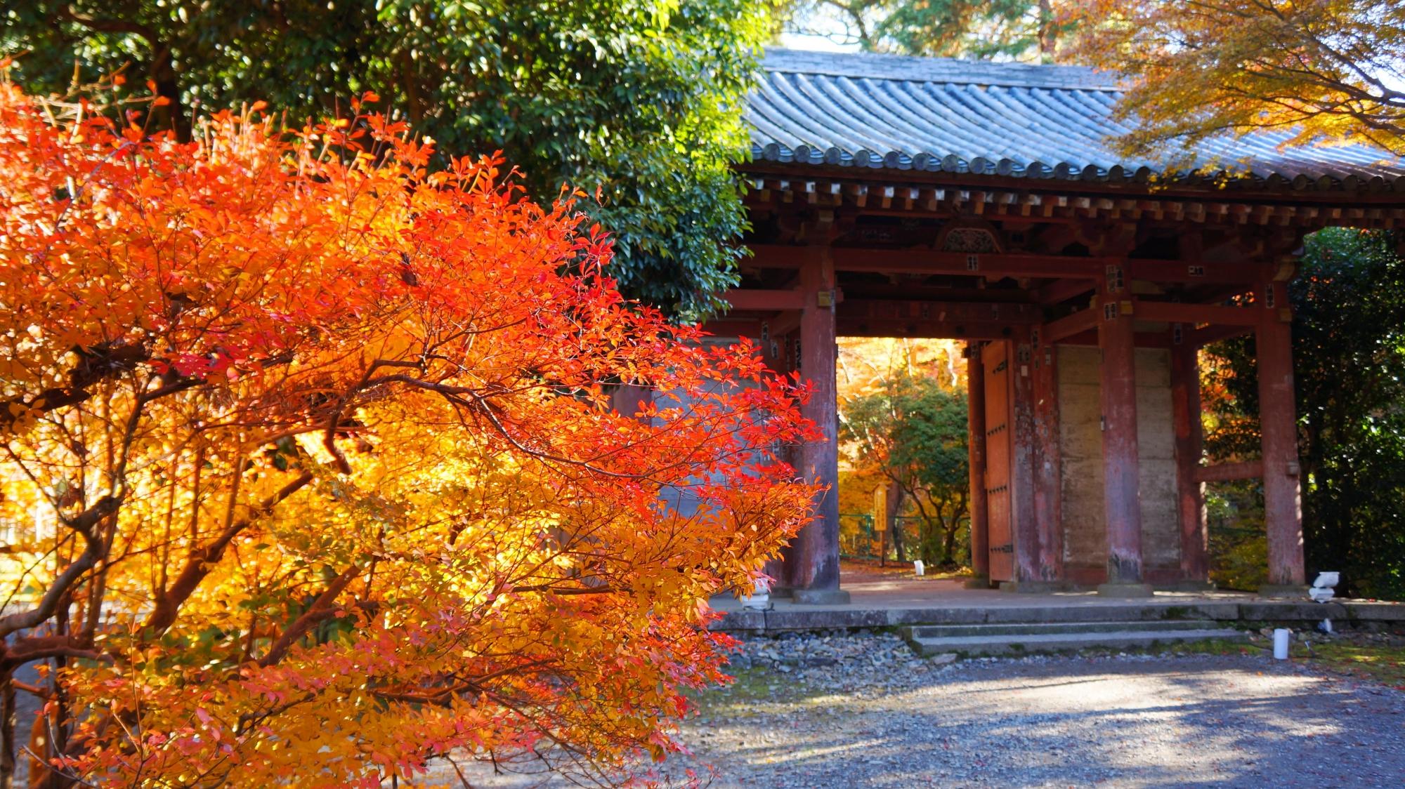 醍醐寺の中門と煌くツツジの紅葉