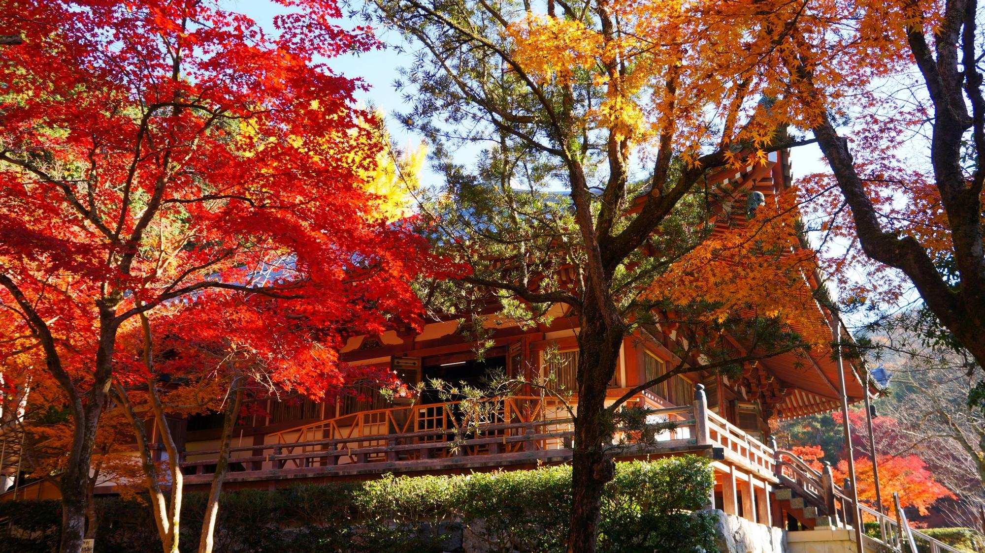 観音堂をつつみこむ煌く紅葉