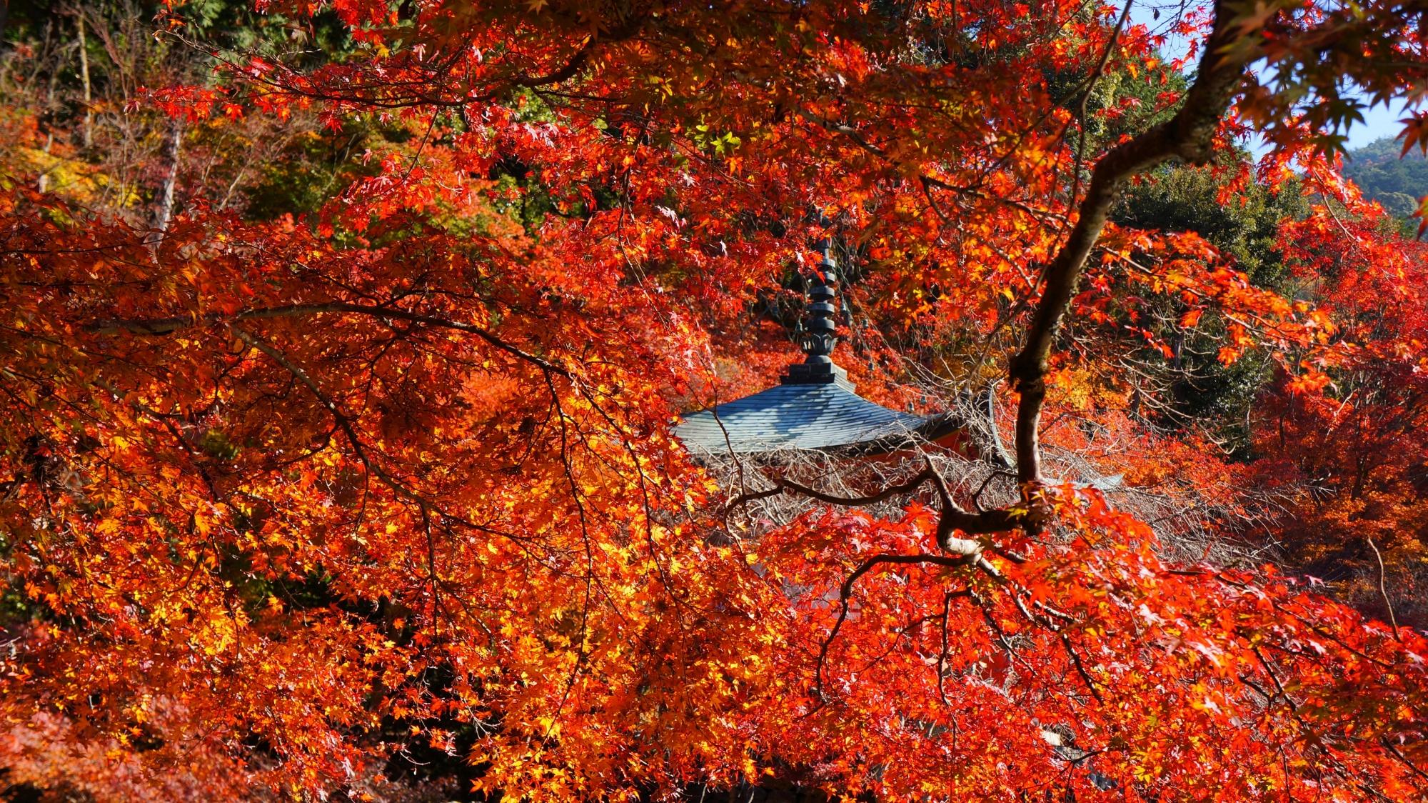 輝く紅葉につつまれる秋の弁天堂
