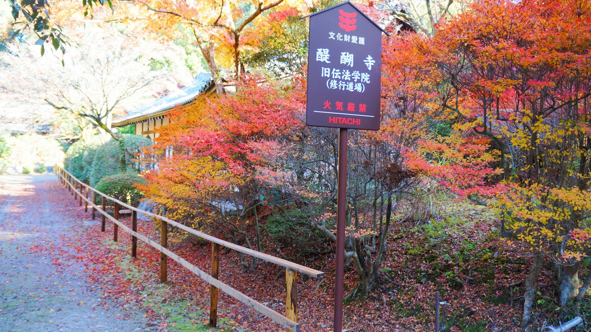 多彩な秋色を作り出す多種多様な木々や植物