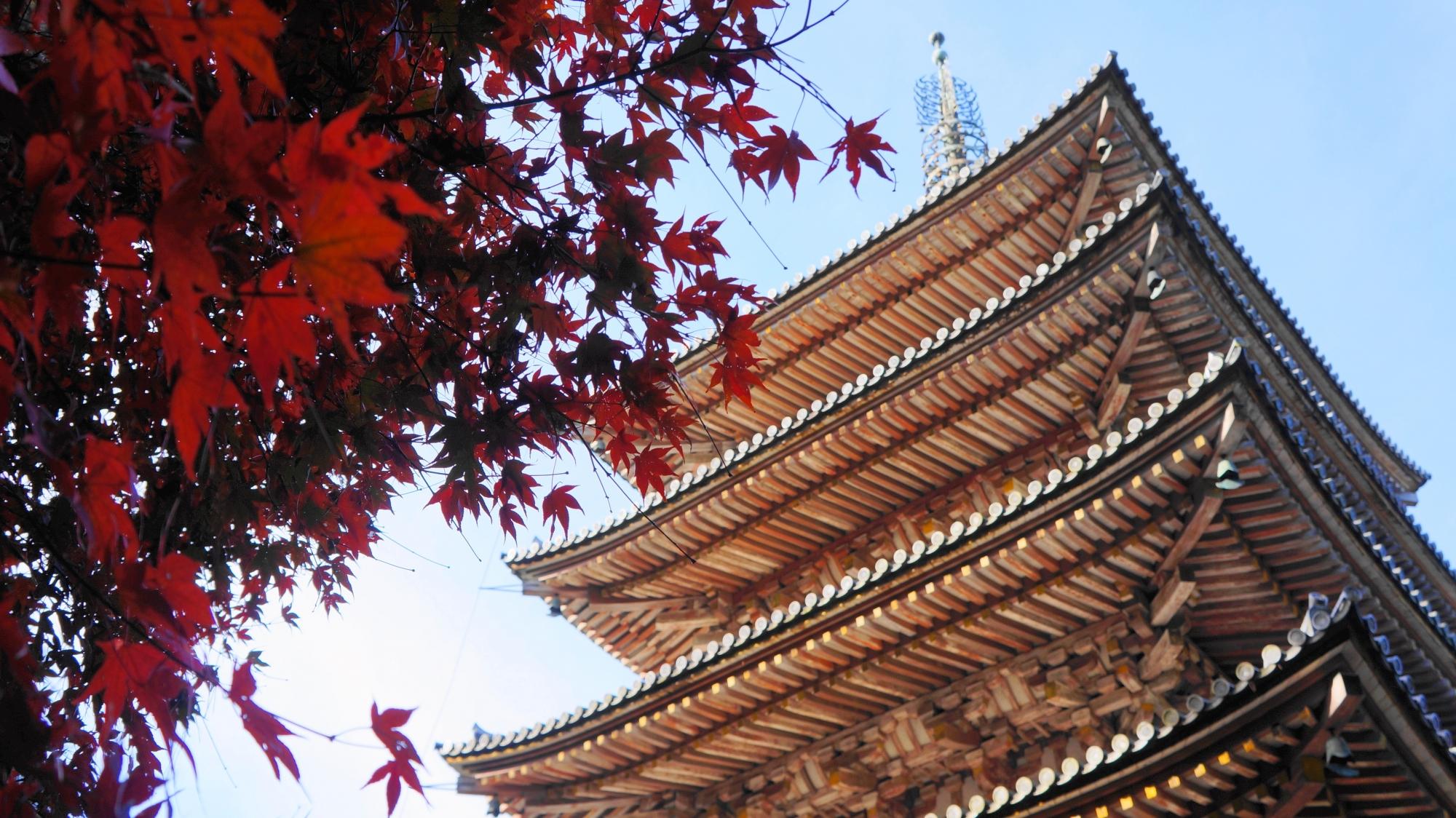 醍醐寺の五重塔の白い軒下に映える赤い紅葉